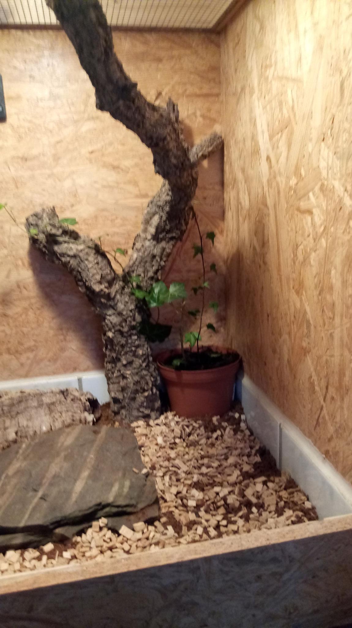 Efeu aus dem eigenen Garten. Garantiert Pestizid frei.