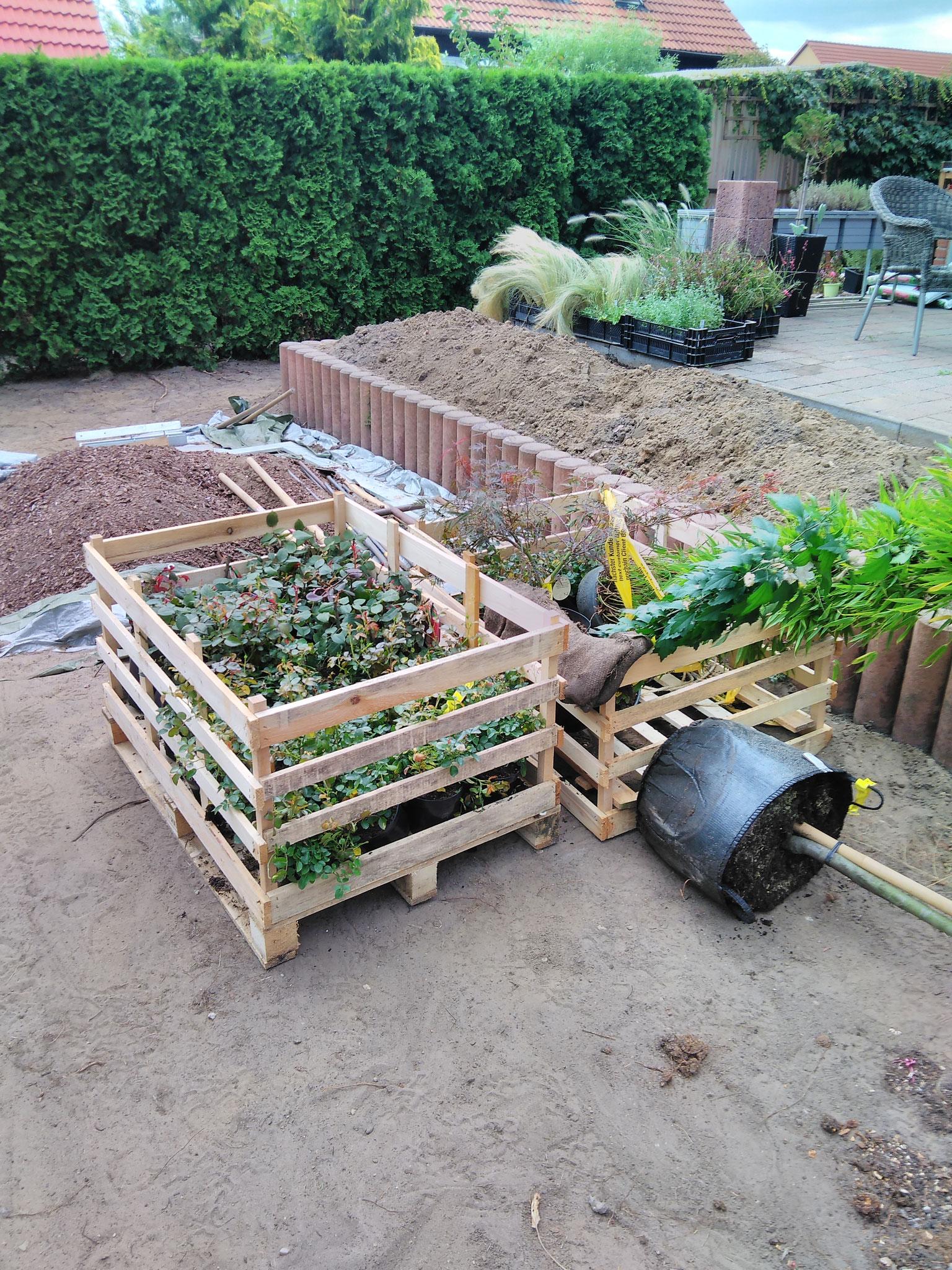 kleine Pflanzenlieferung