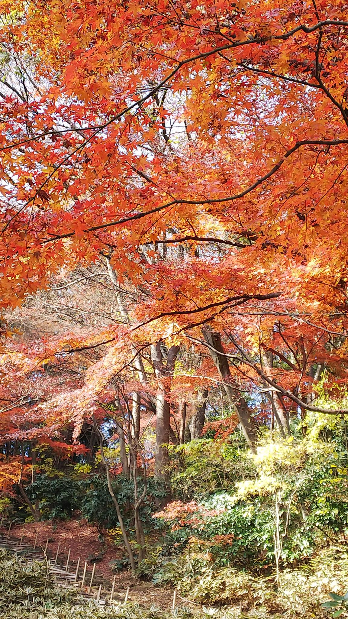 「聴秋閣」脇の名残の紅葉
