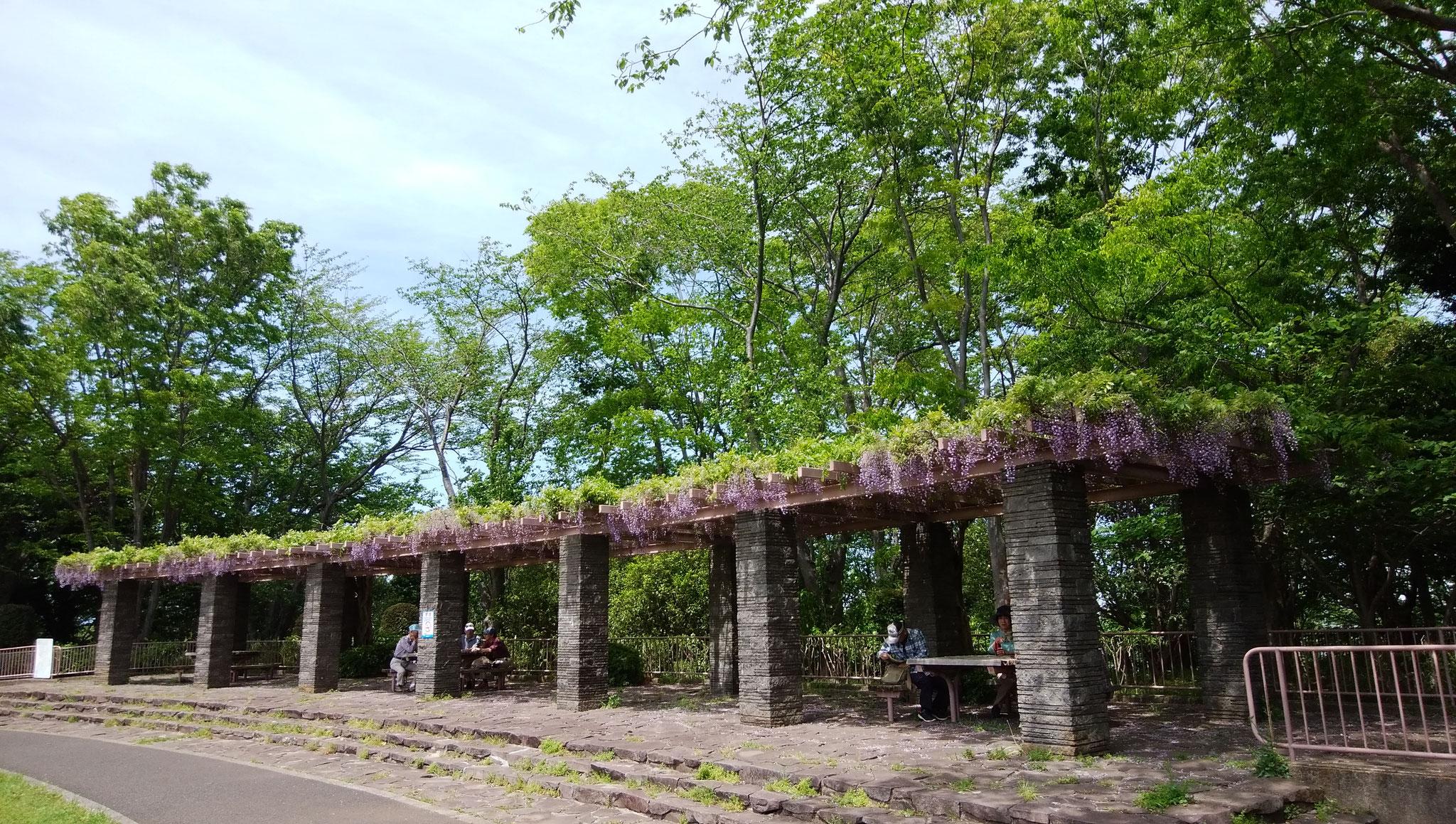 大庭城址公園の城郭をイメージしたパーゴラの藤棚
