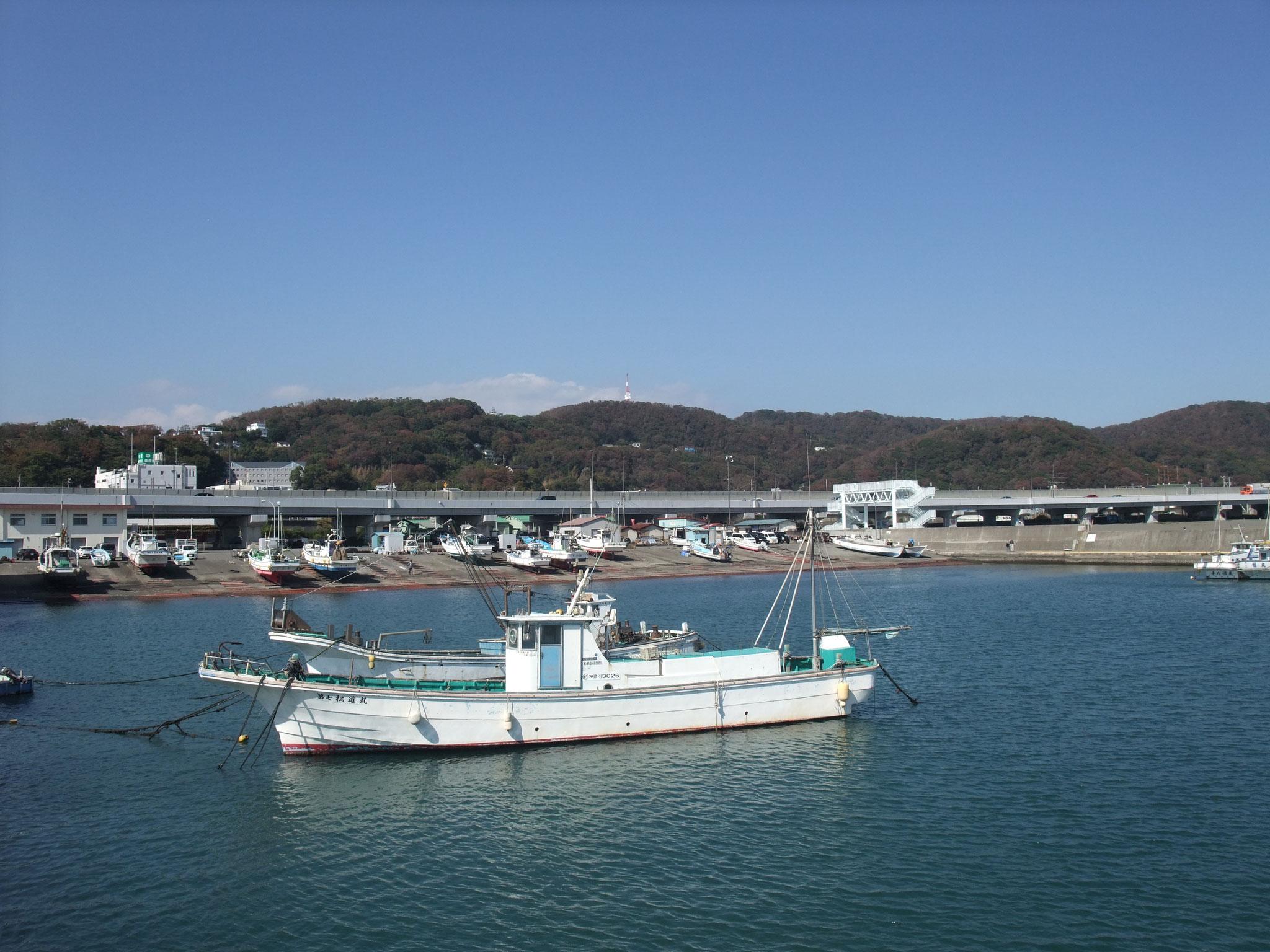 海辺に出て大磯漁港辺りで昼食 バックに高麗山と湘南平