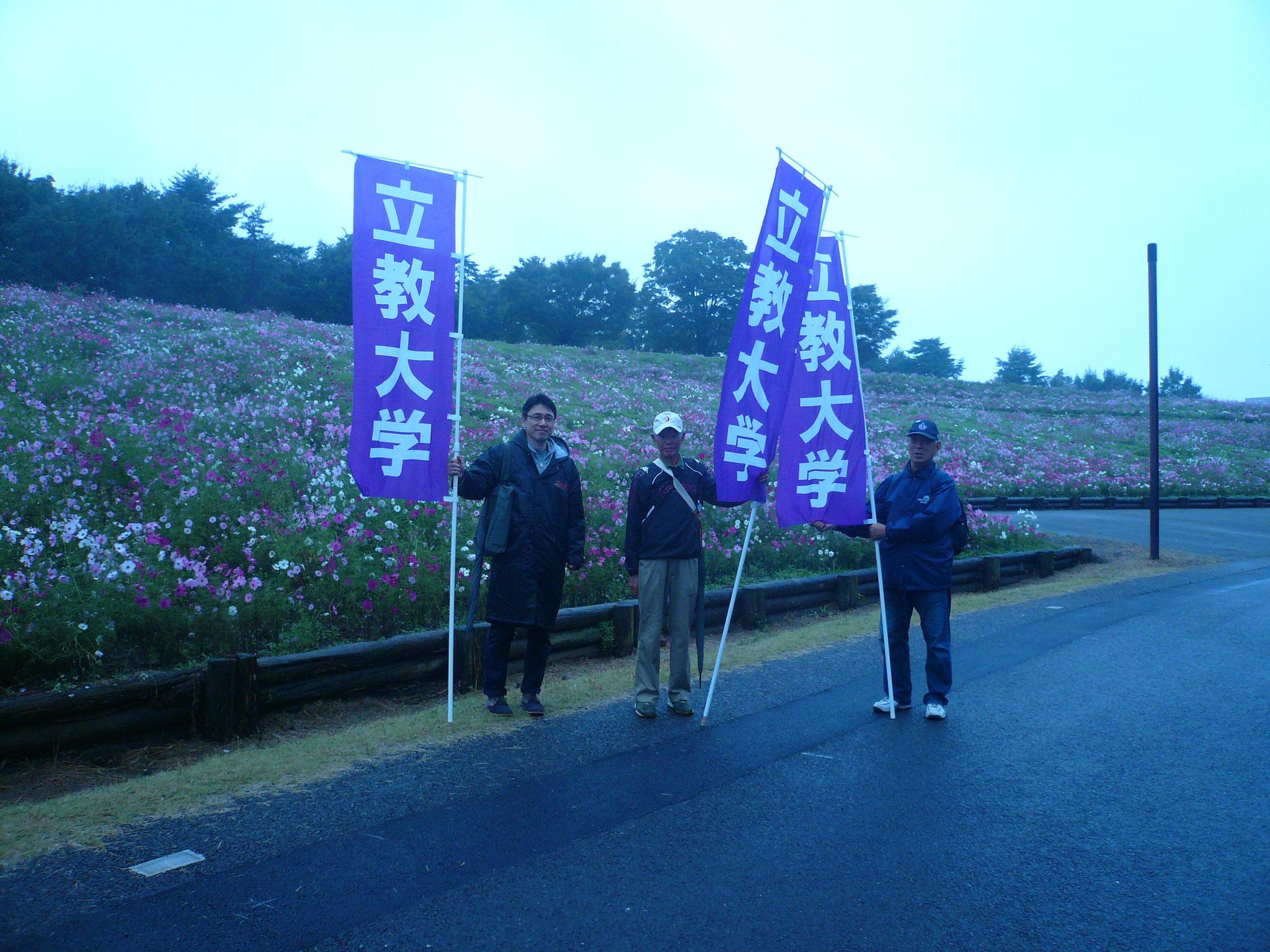 今年も昭和記念公園の秋桜がきれい