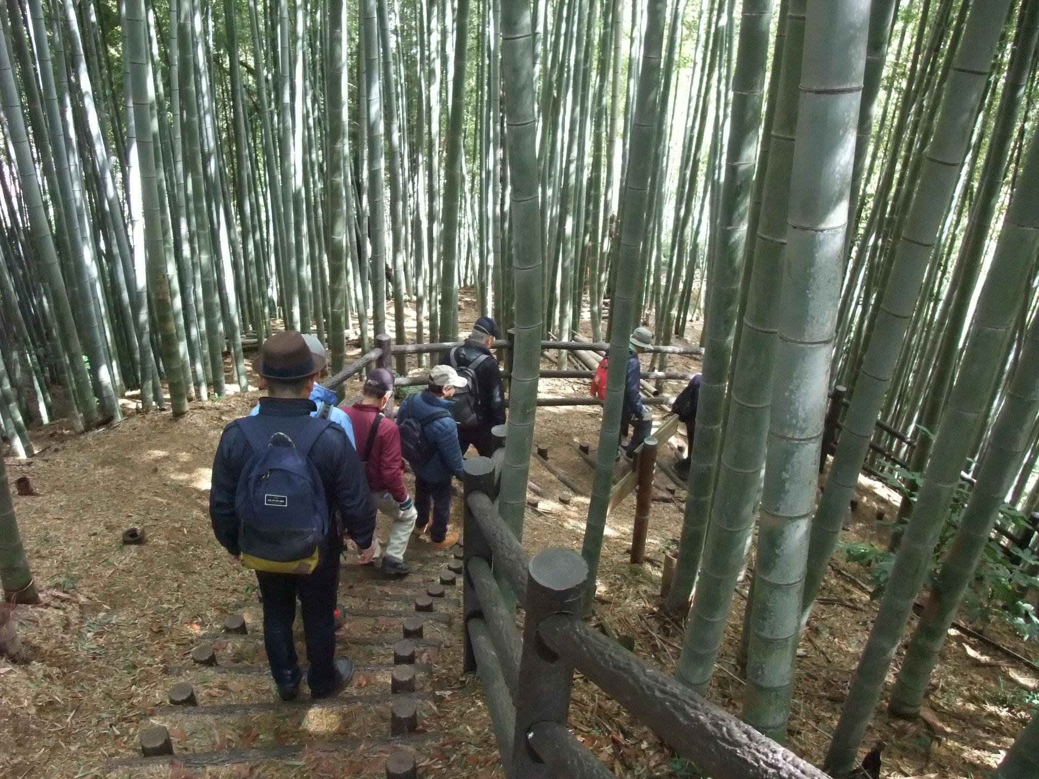 竹林の小道を下る