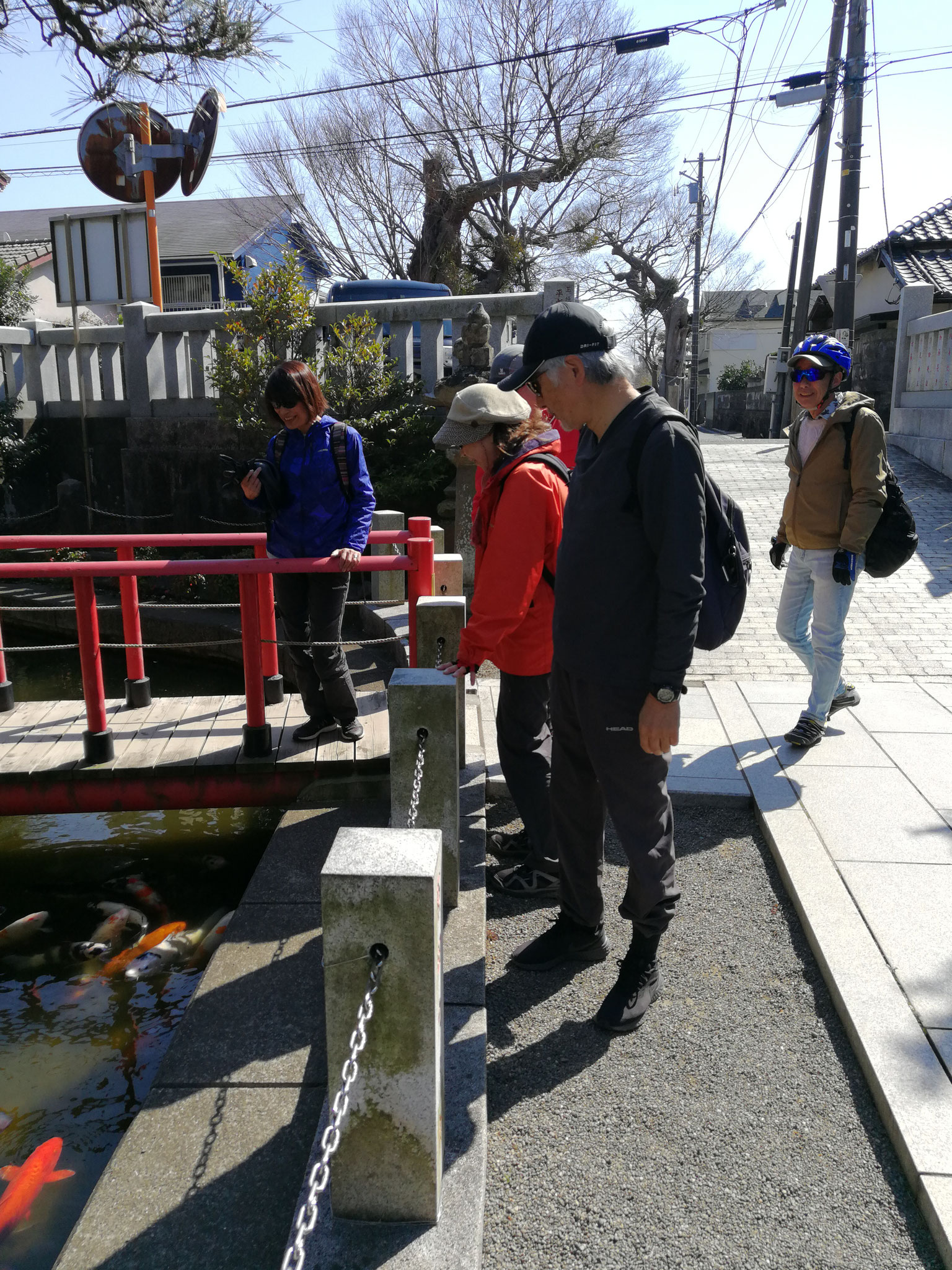 六所神社の鯉と🌸談義