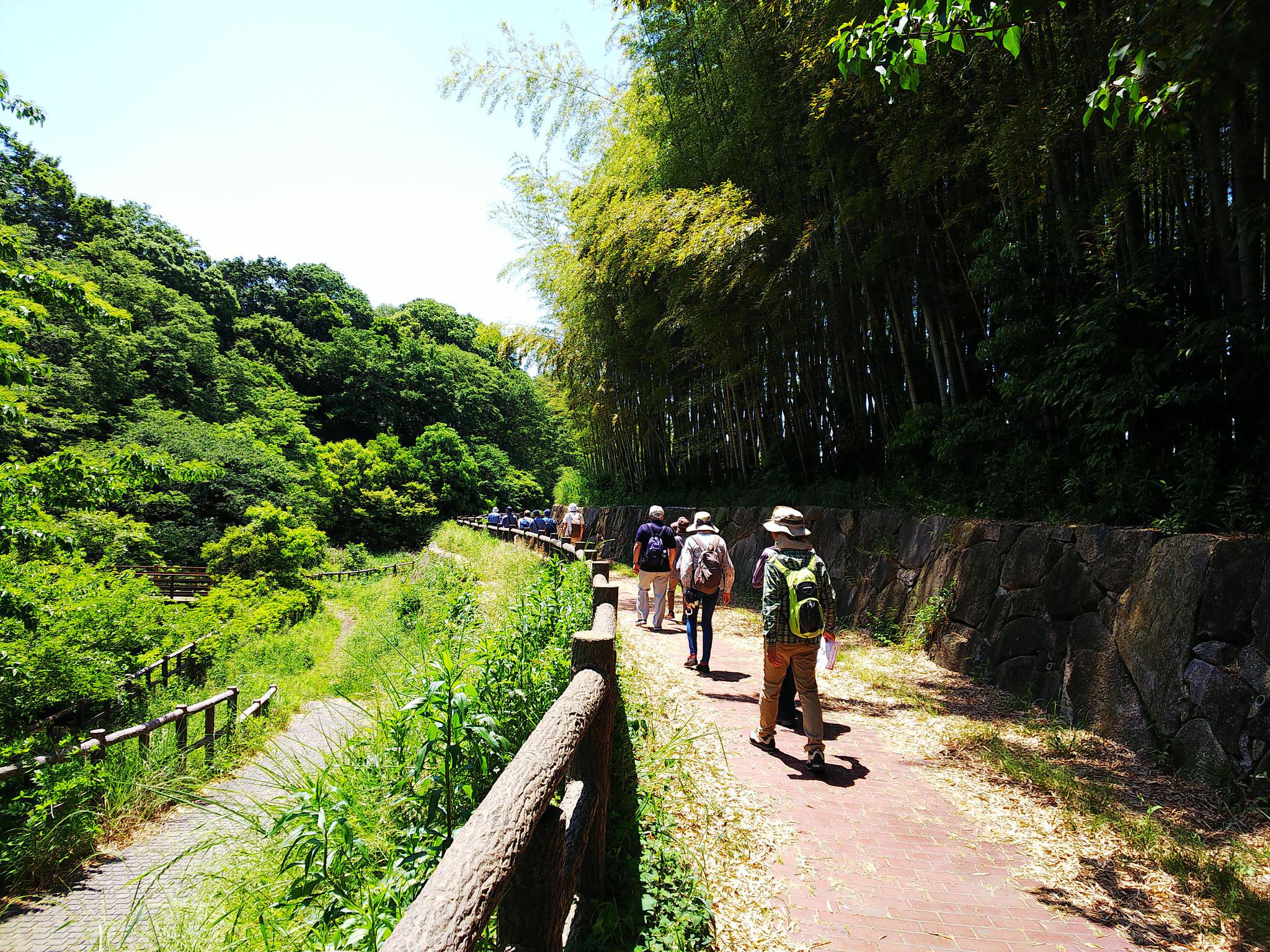 左に宇田川 右手に竹林