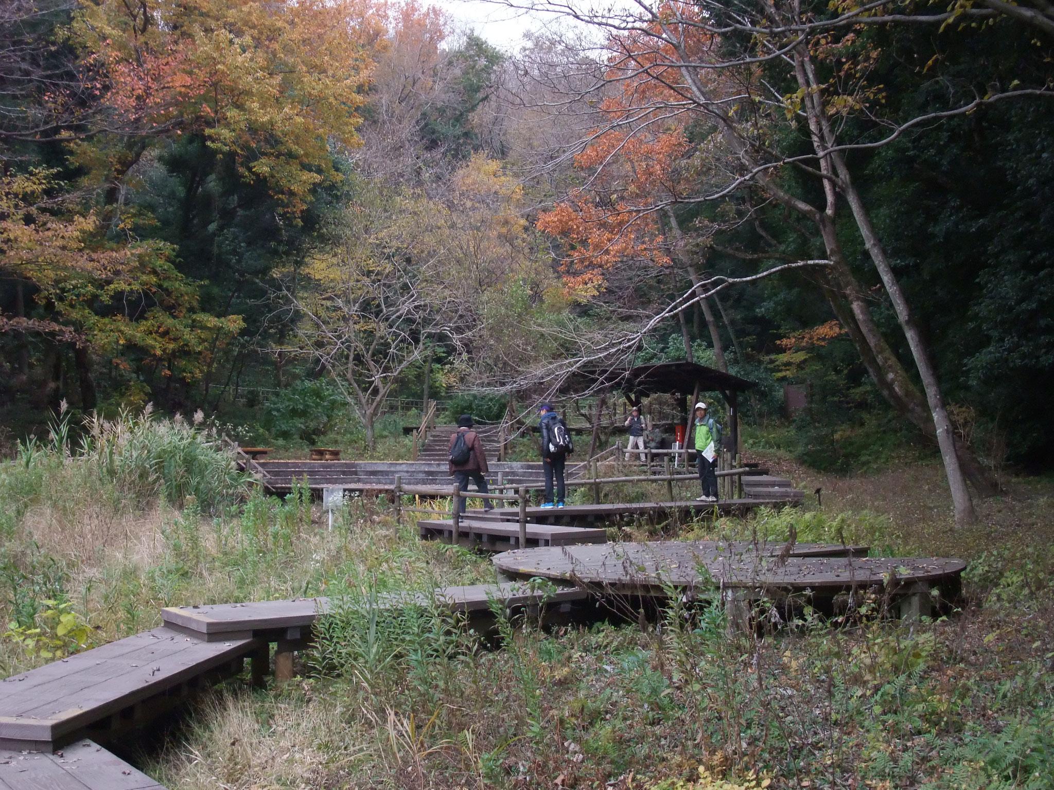 園内の木道で瑠璃色のカワセミに出会う