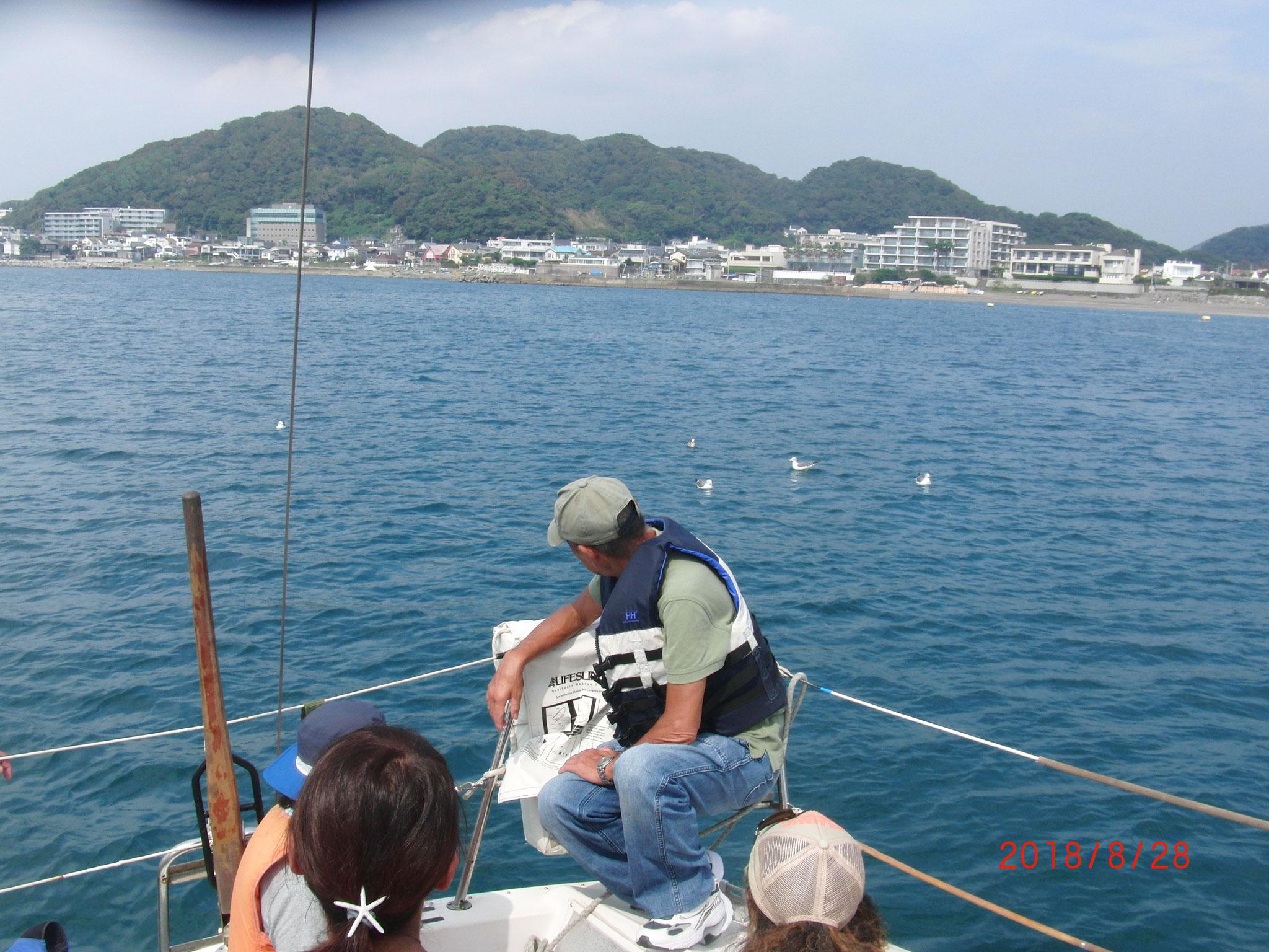 カモメがヨットに接近中 最後はトンビまでが合流。。。