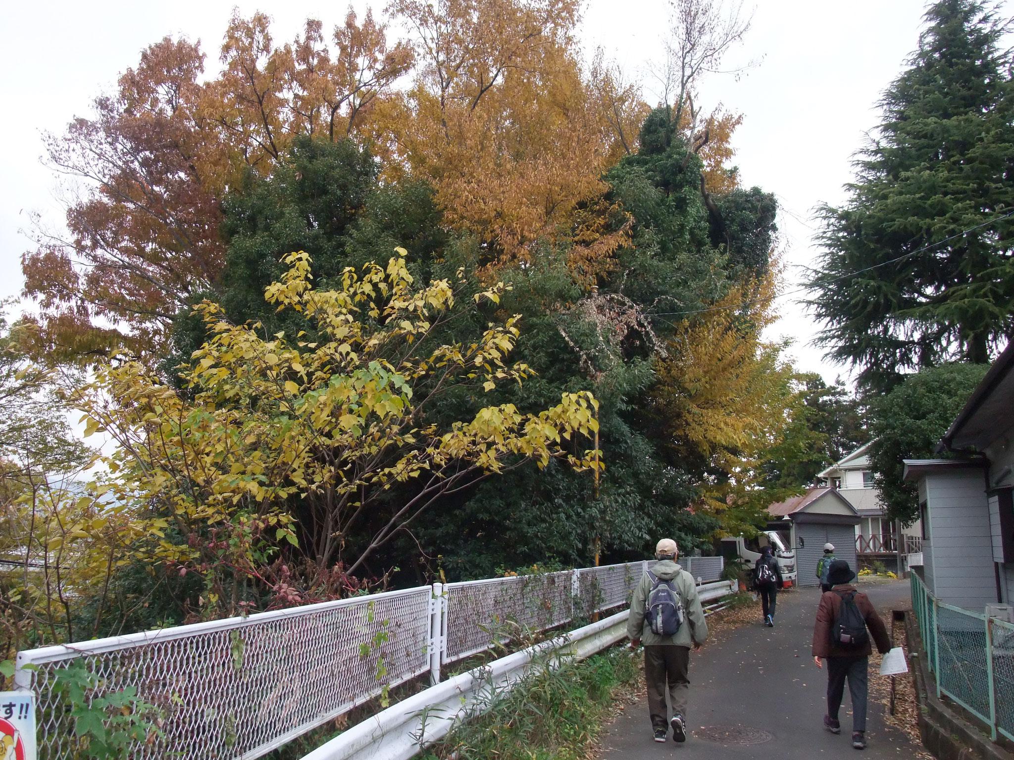 梨の木坂横穴墓群を見て
