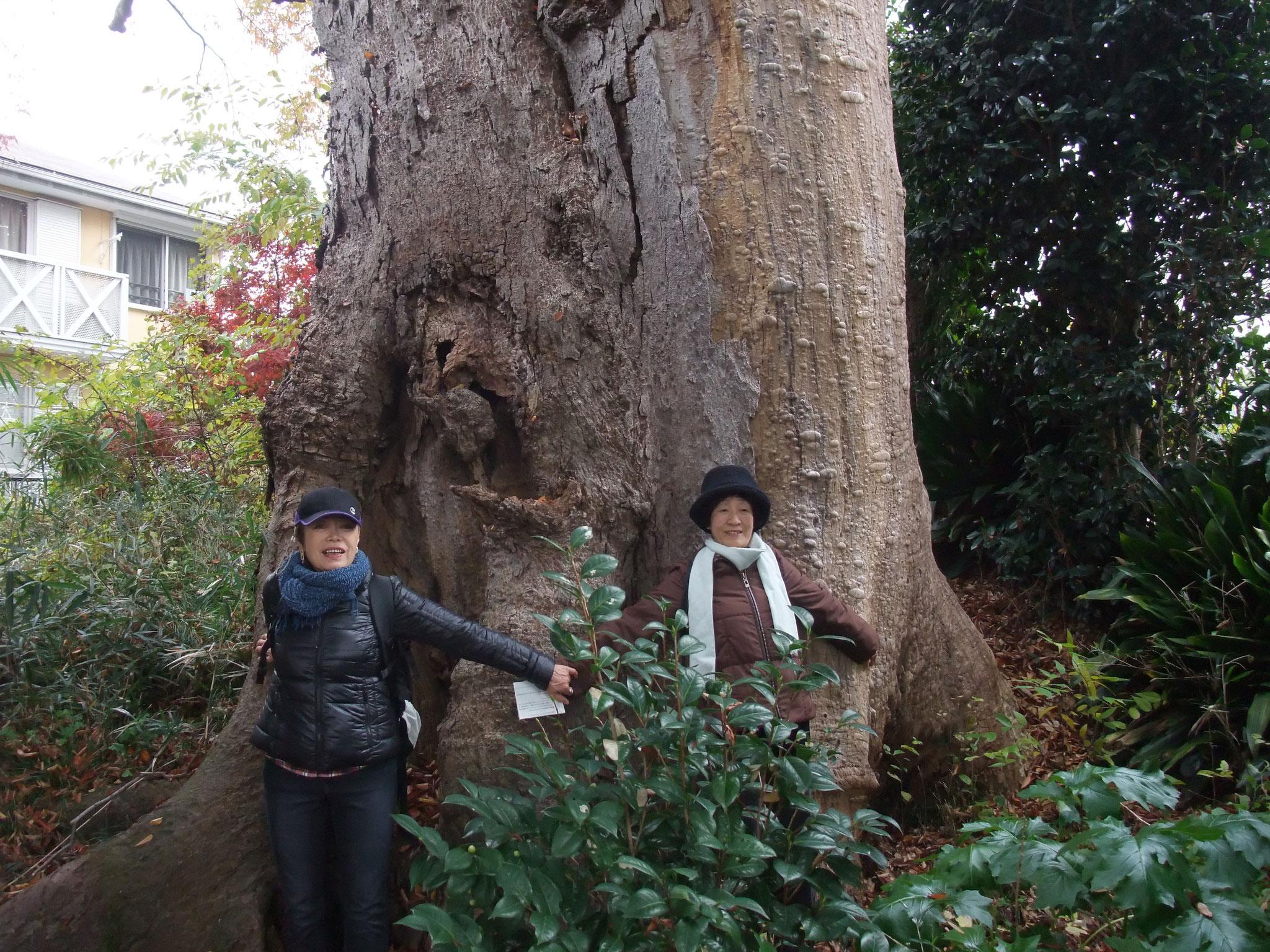 樹齢300年の大欅にびっくりポン!!