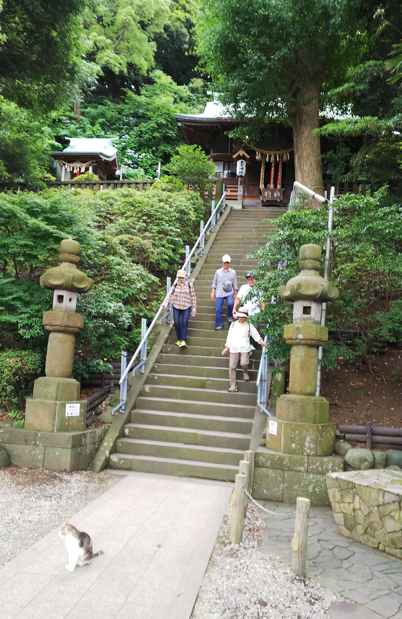 走水神社に参拝・・・下に猫が・・・