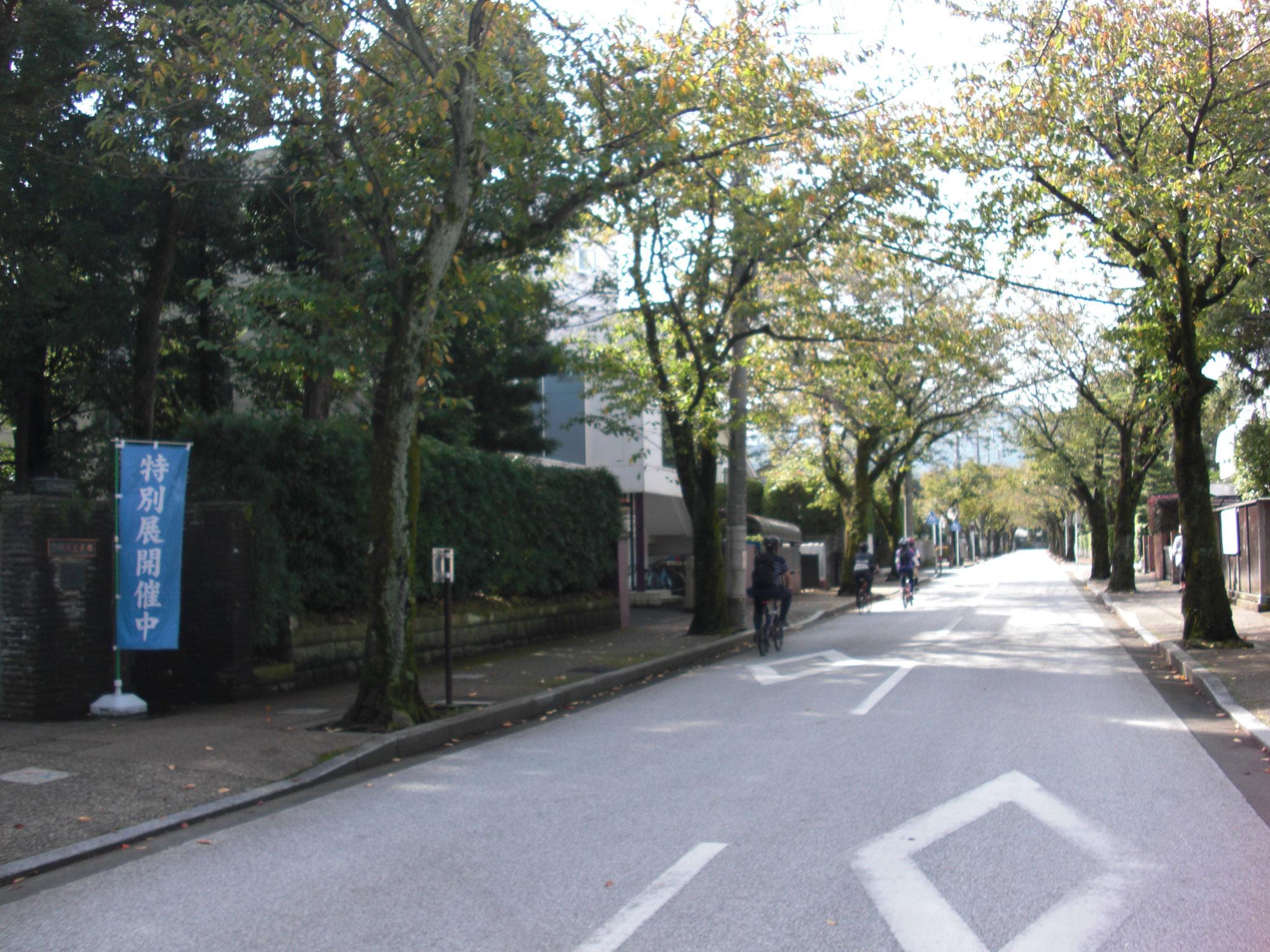 小田原文学館近くの桜並木