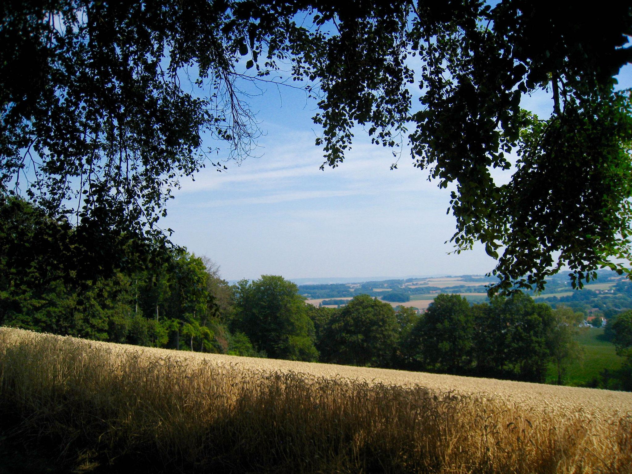 Schweichler Berg: Blick vom Panorama-Punkt