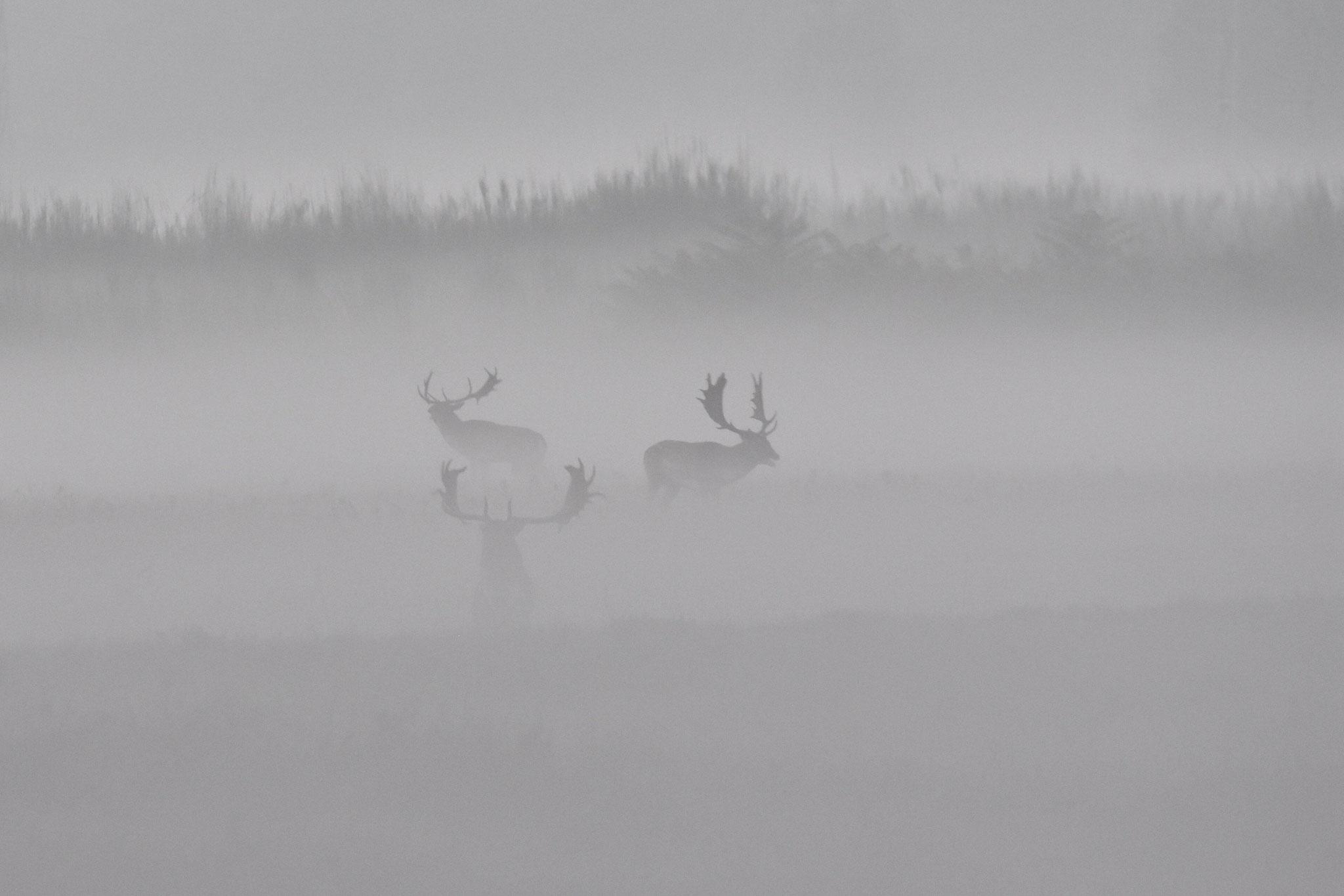 November 2020 - Damwild - der Herbst ist da (Foto: NABU Büttelborn [or])