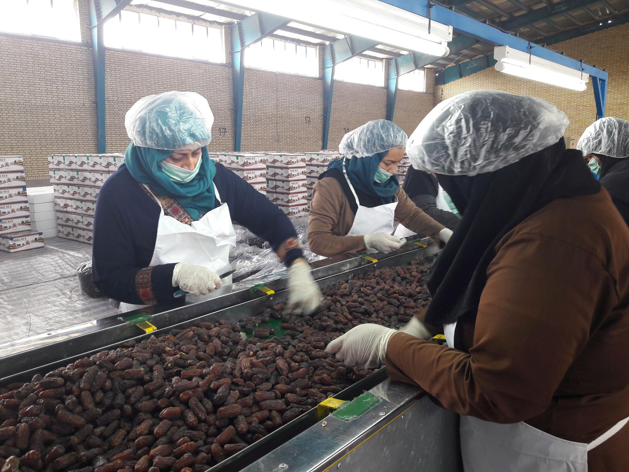 Final Sorting at Pariz Nuts Factory