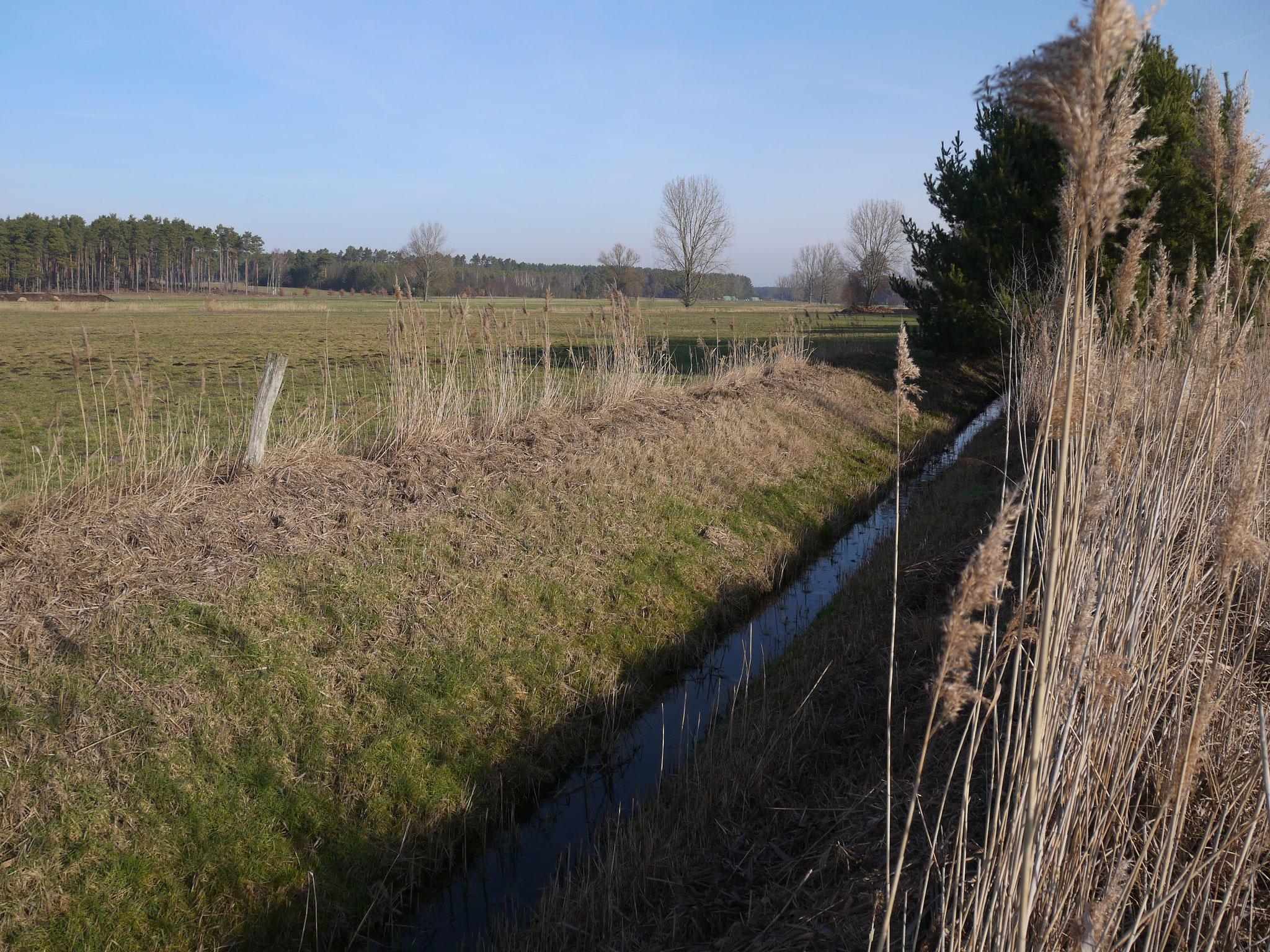 Blick in die Gerickenwiesen; Foto: Michael Wetzel