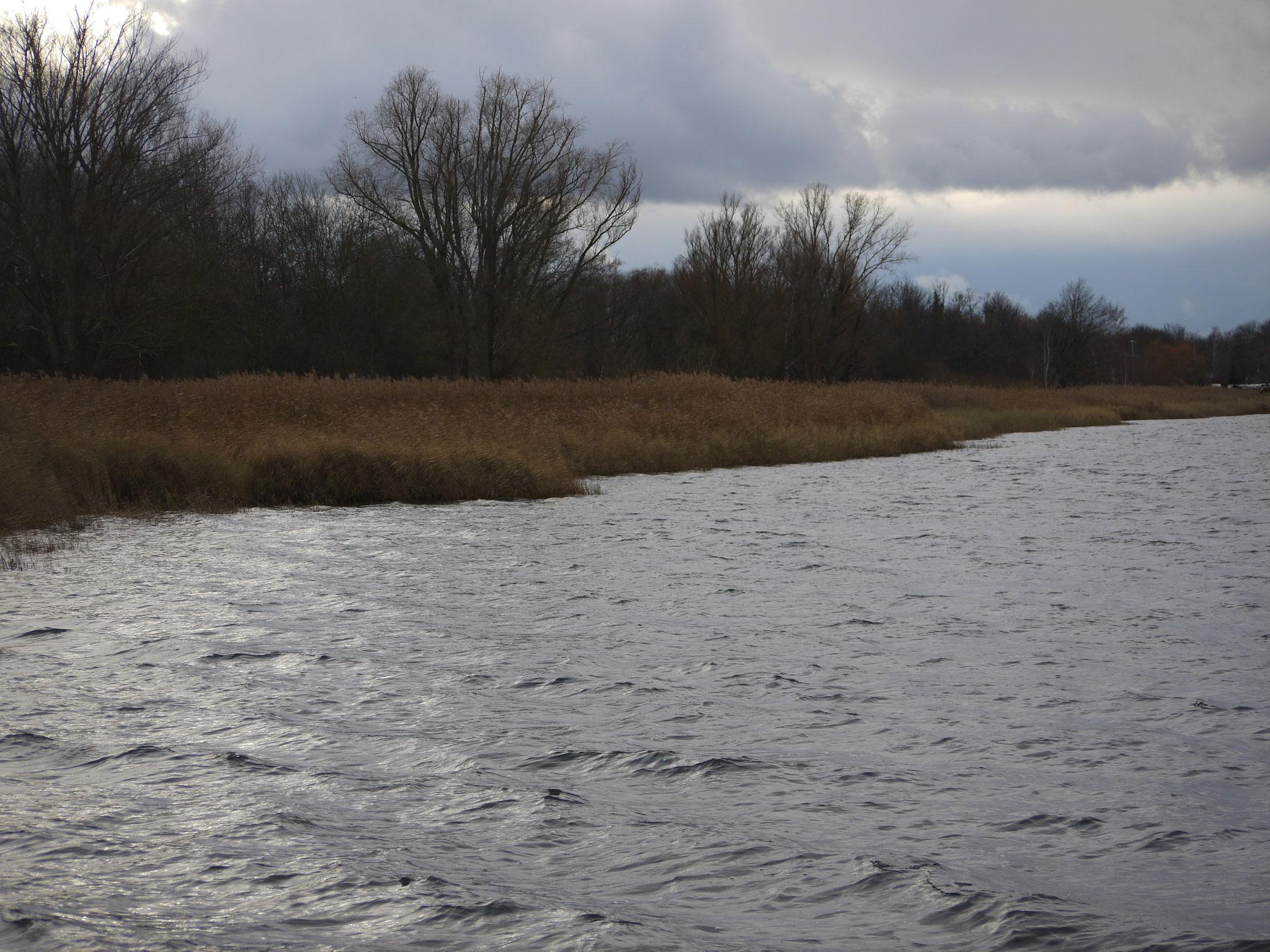 Verschilftes Nordostufer; Foto: Michael Wetzel