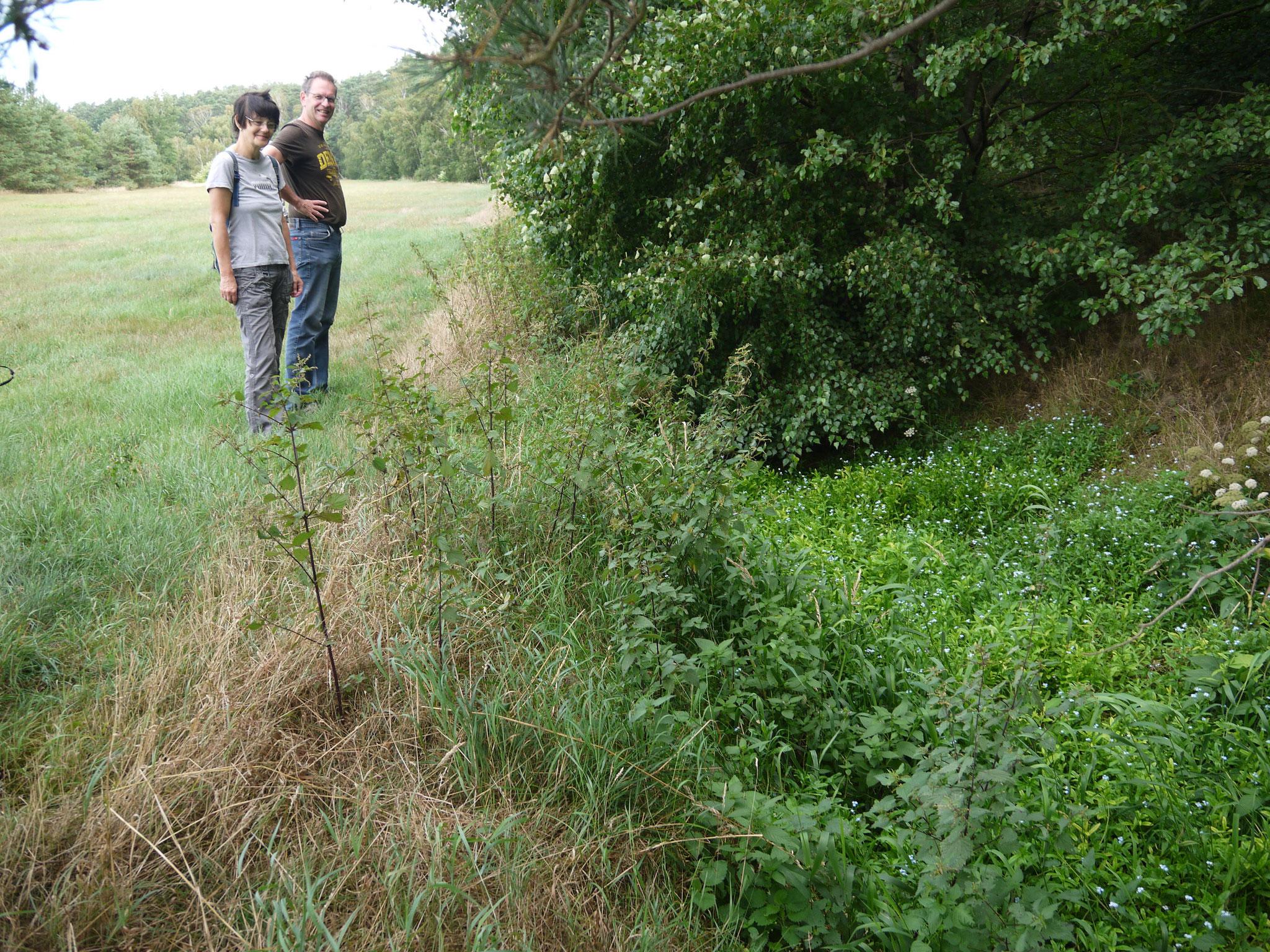 Üppige Vegetation im Krummbek-Bachbett; Foto: Michael Wetzel