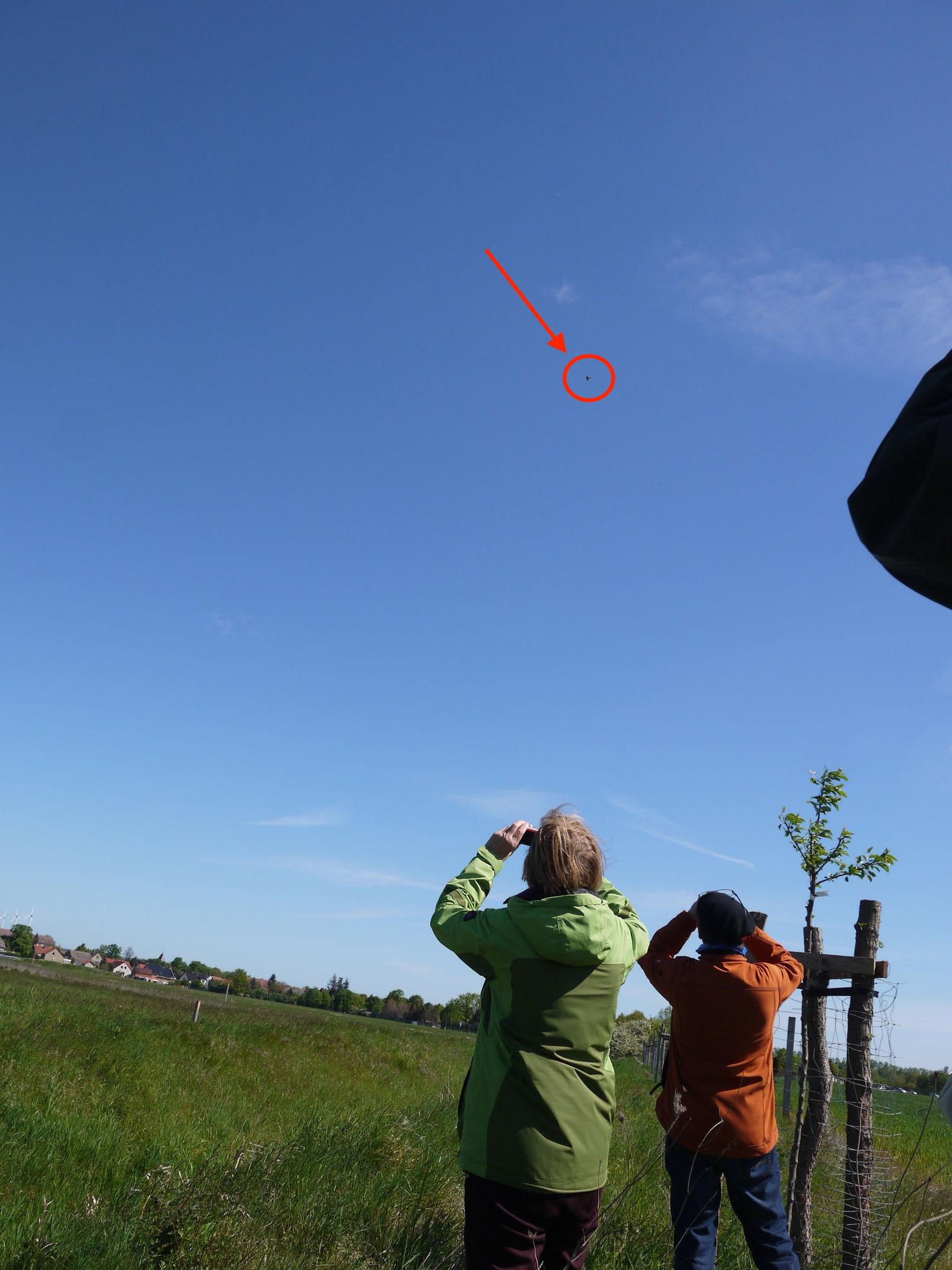 Beobachtung einer singenden Feldlerche; Foto: Michael Wetzel