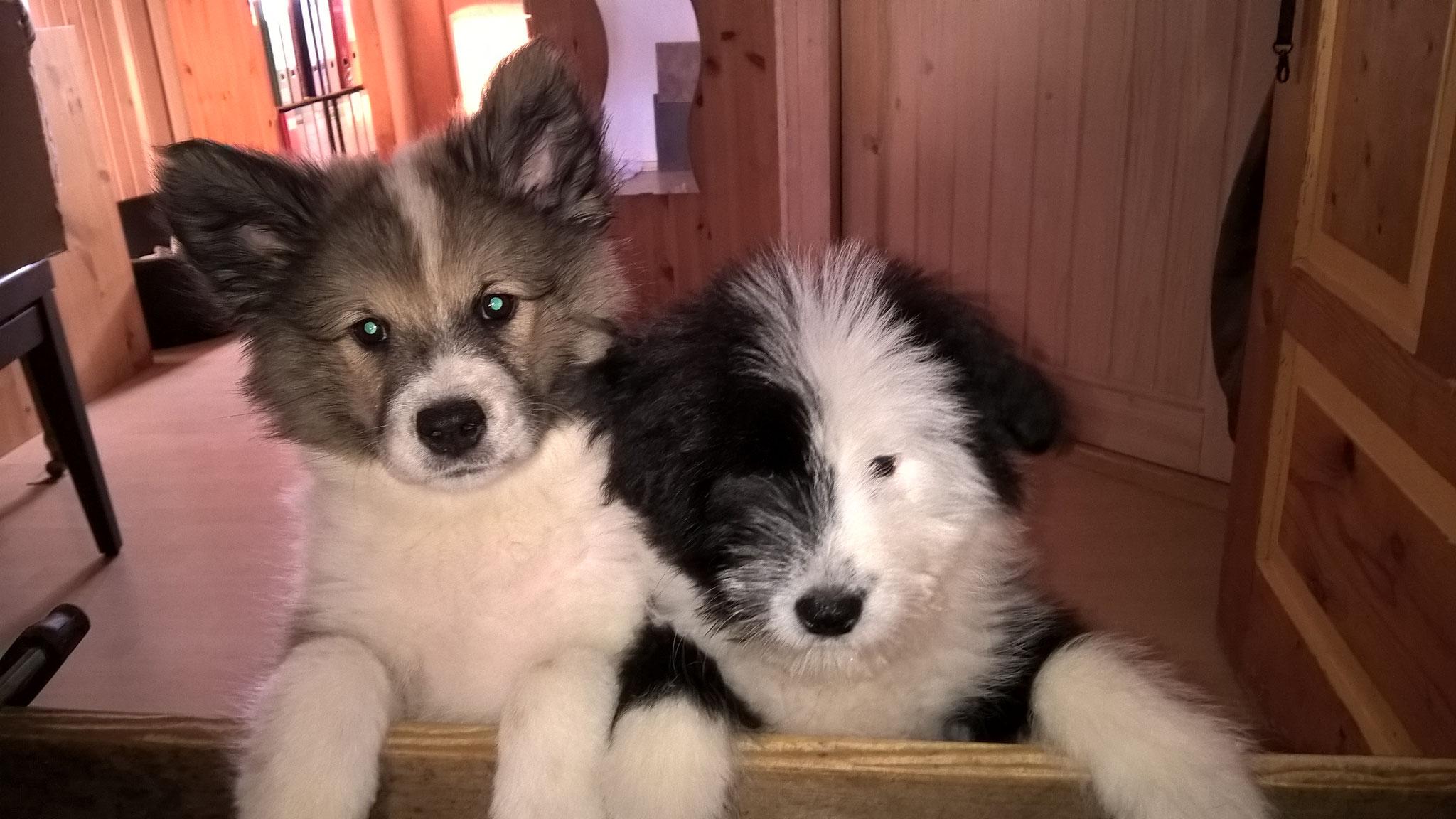 Maisie mit Schwester Queenie