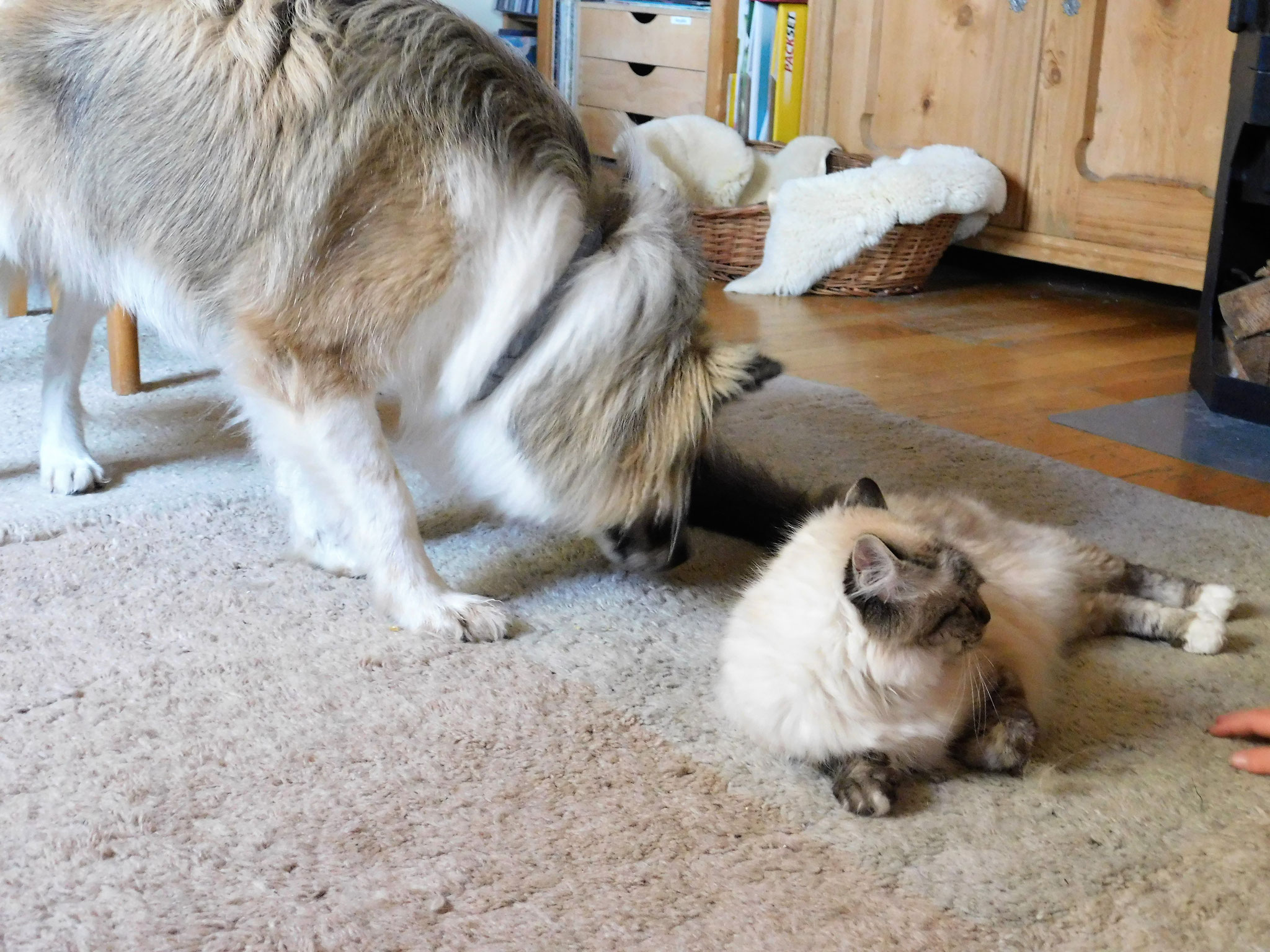 Maisie mit Samira