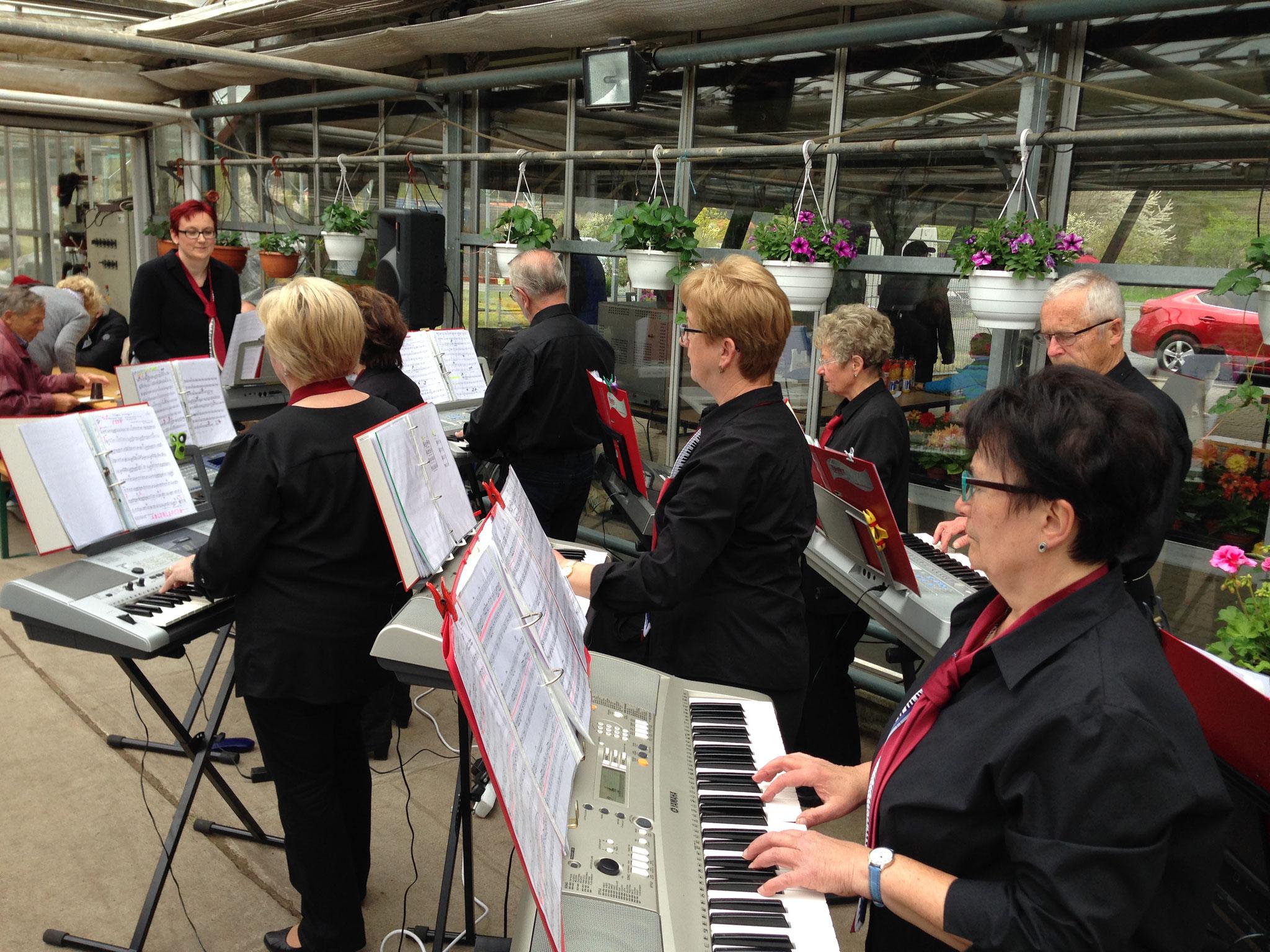 2016 - Tag der offenen Gärtnerei , die Musik spielt wegen schlechten Wetters im Gewächshaus
