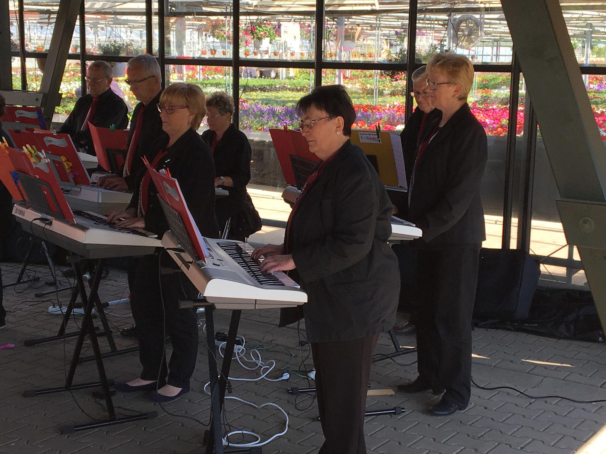 2017 - Tag der offenen Gärtnerei - schöne Musik bei schönem Wetter
