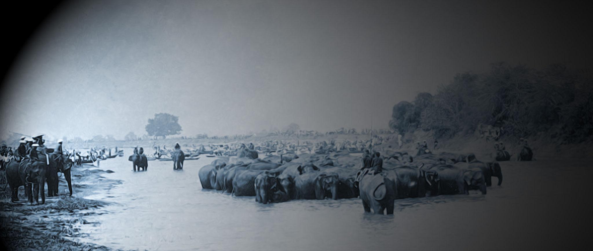 Herding elephants at rangsit canal