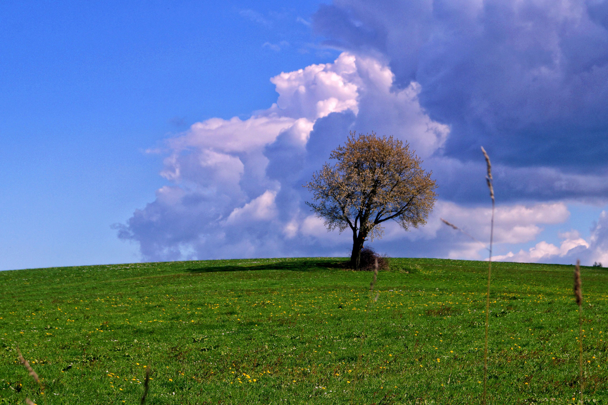 Wandergebiet Rhön - Rotes Moor