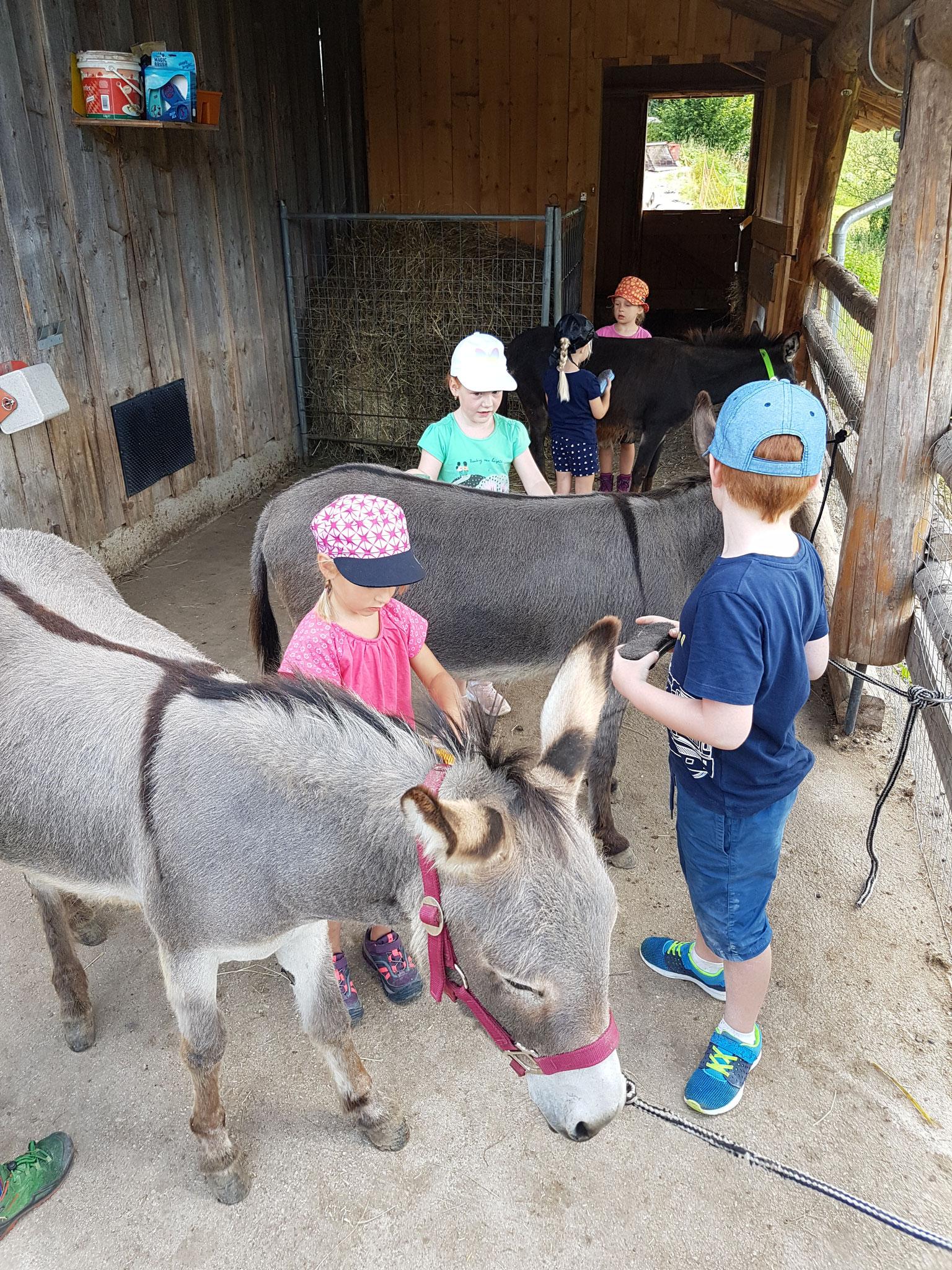 Ein Nachmittag mit Esel und Ziegen