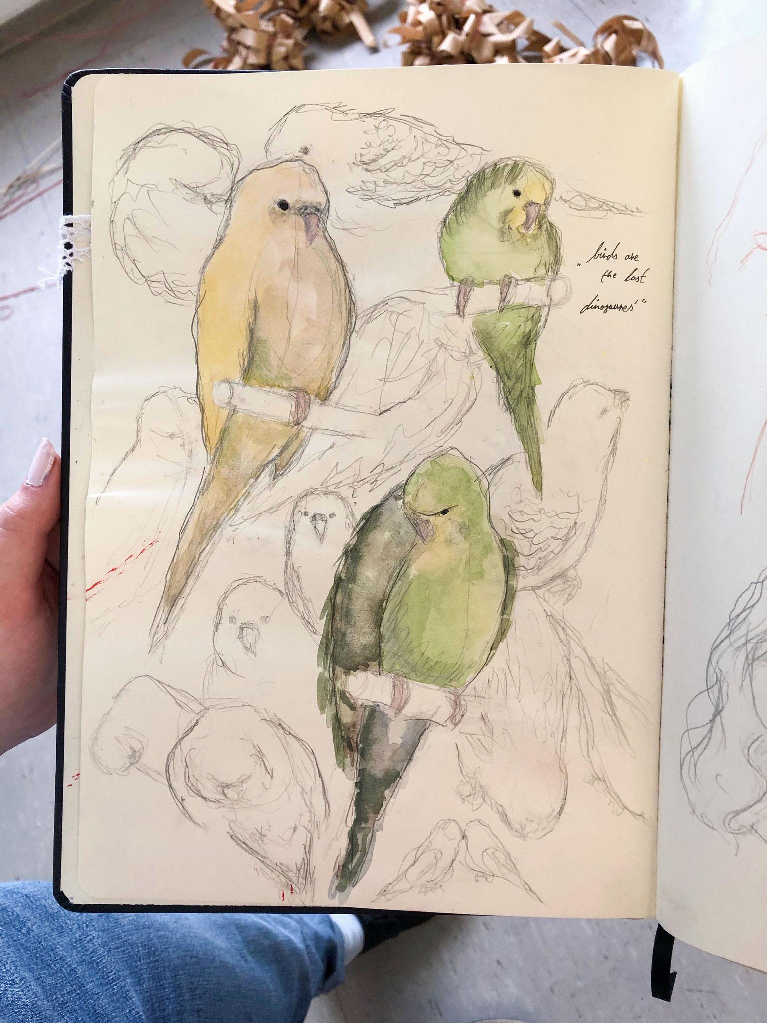 Naturstudie eines Vogels (Lucia Weber)