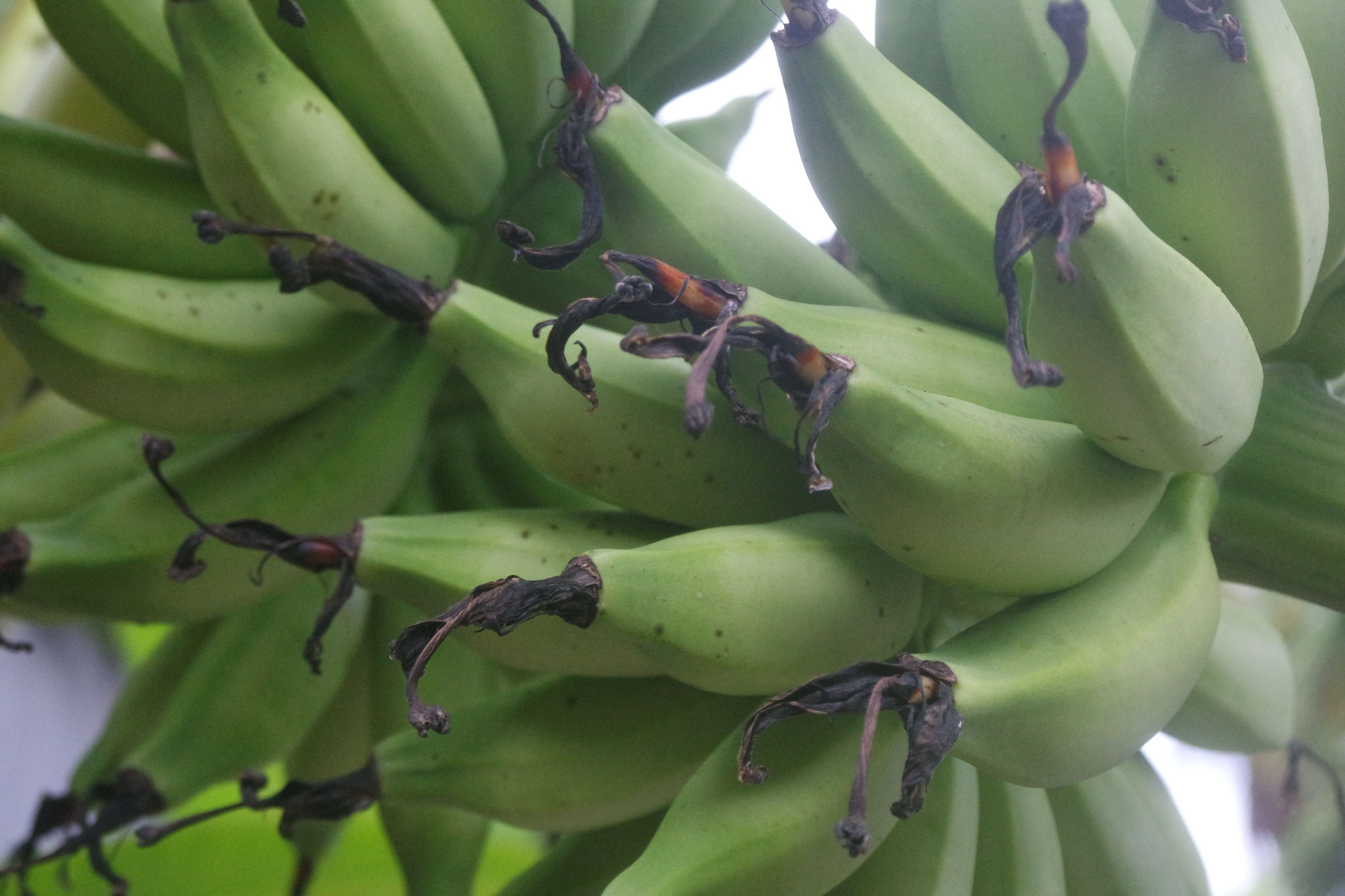 Bulih Beach Bungalows - Seasonal Fruits
