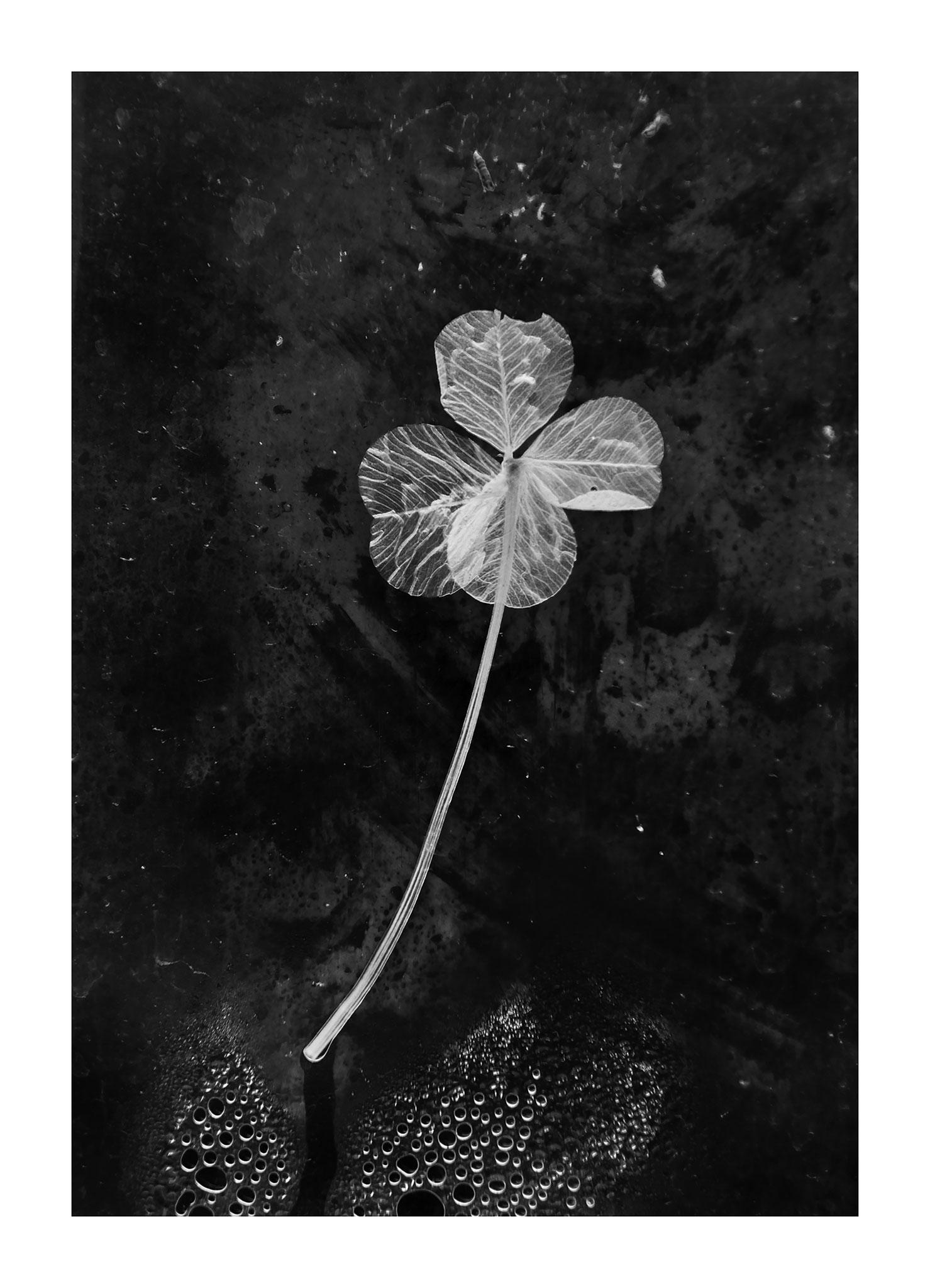 // ADOPTEE PAR JOSEPHINE // Tirage avec marge blanche (Papier 48x35 cm - Photographie 31x42 cm) - Chaumont-sur-Loire