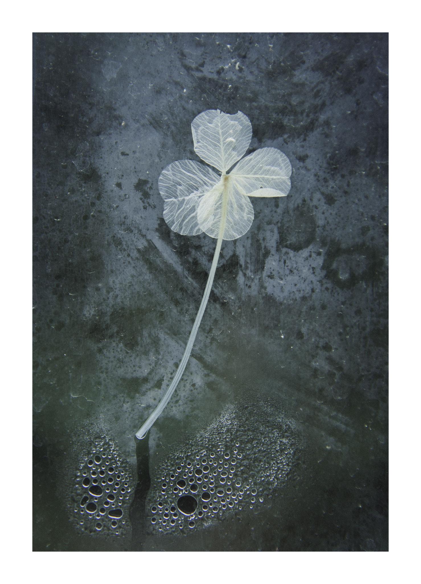 // ADOPTEE PAR RACHIDA // Tirage avec marge blanche (Papier 48x35 cm - Photographie 31x42 cm) - Chaumont-sur-Loire