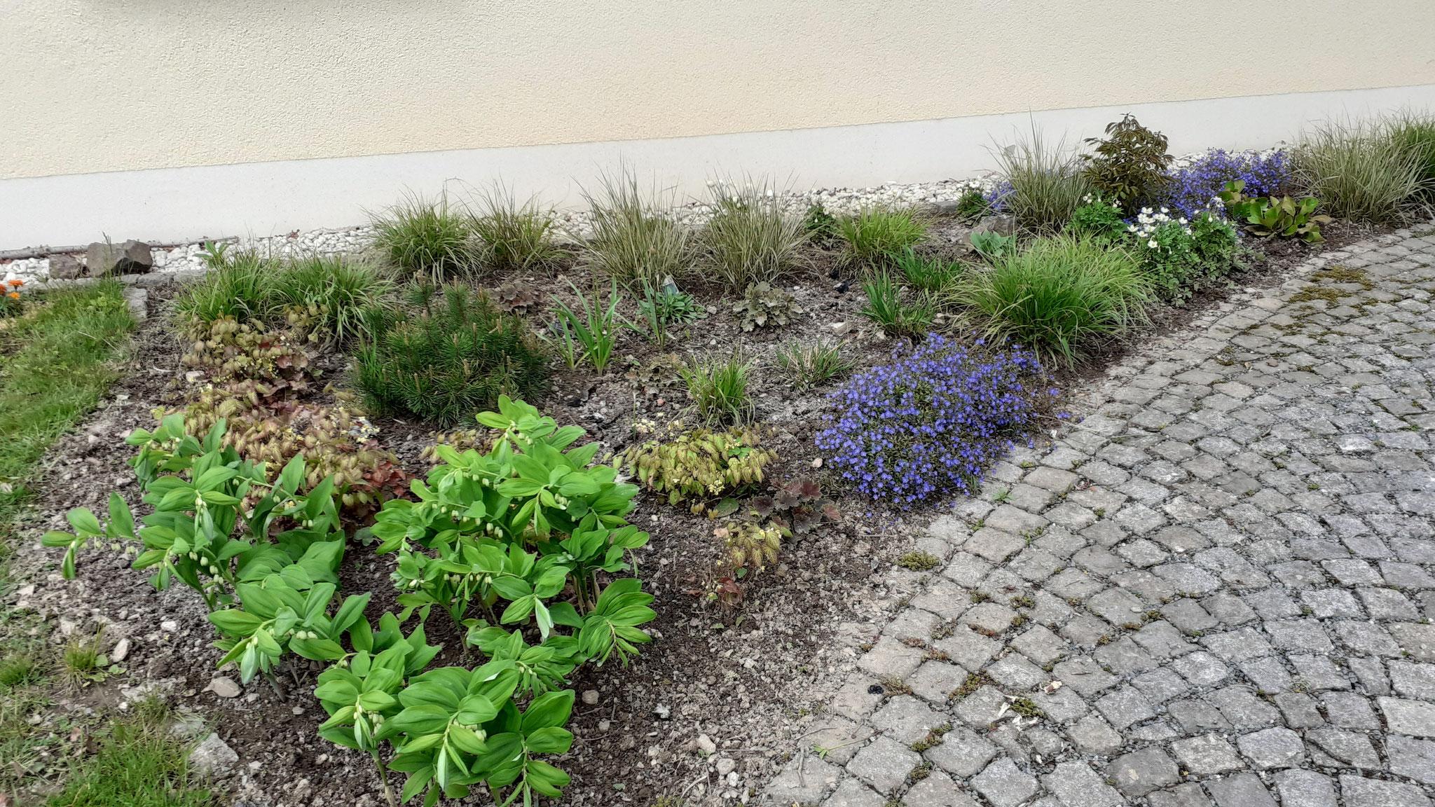 Bepflanzung eines Vorgartens im LKR Hof