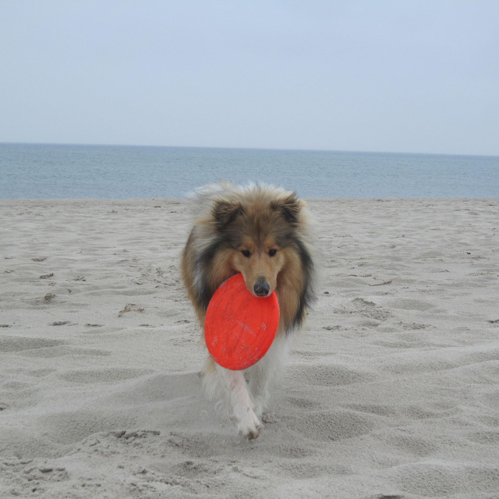 Mein Frisbee muss auch mit