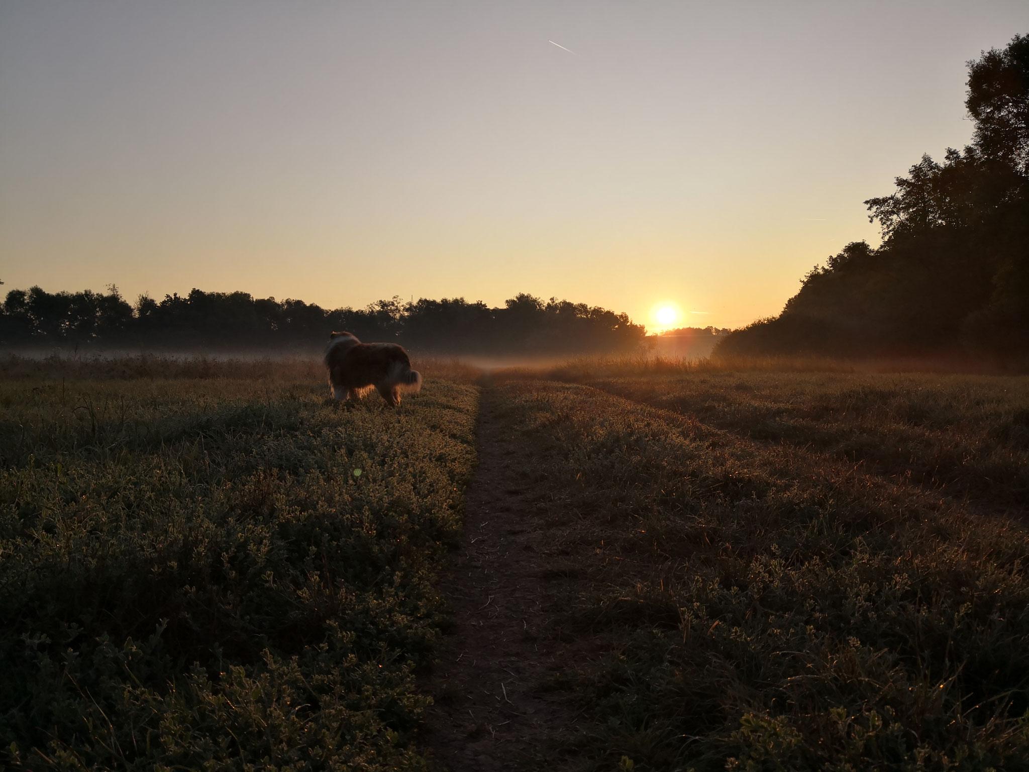 Morgenrot auf der Hundewiese