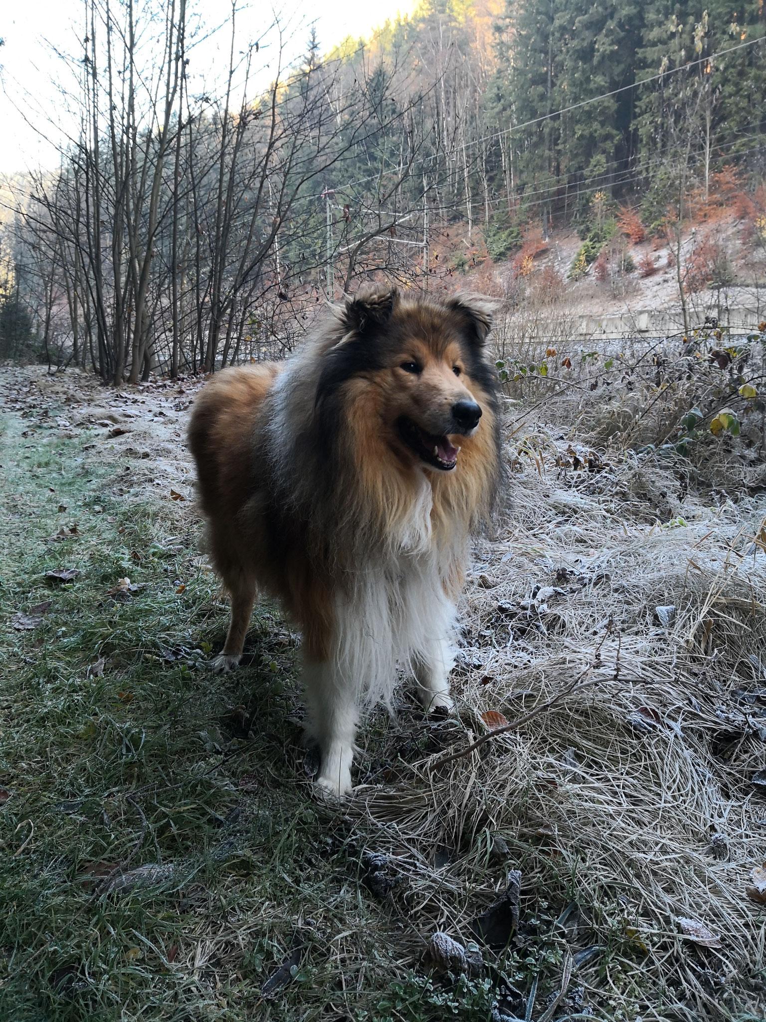 Im Wald von Lauenstein