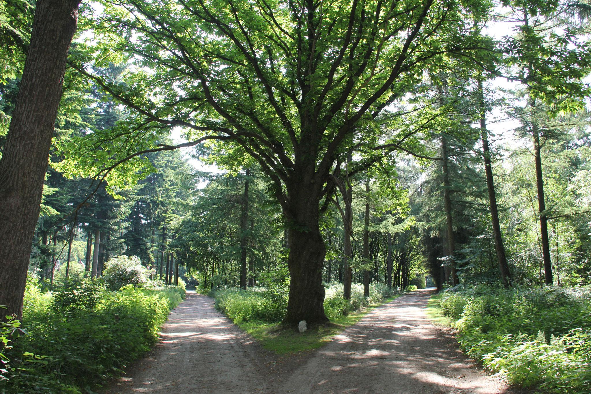 Zicht op het begin van de druppelvormige laan, geaccentueerd door een solitaire boom.