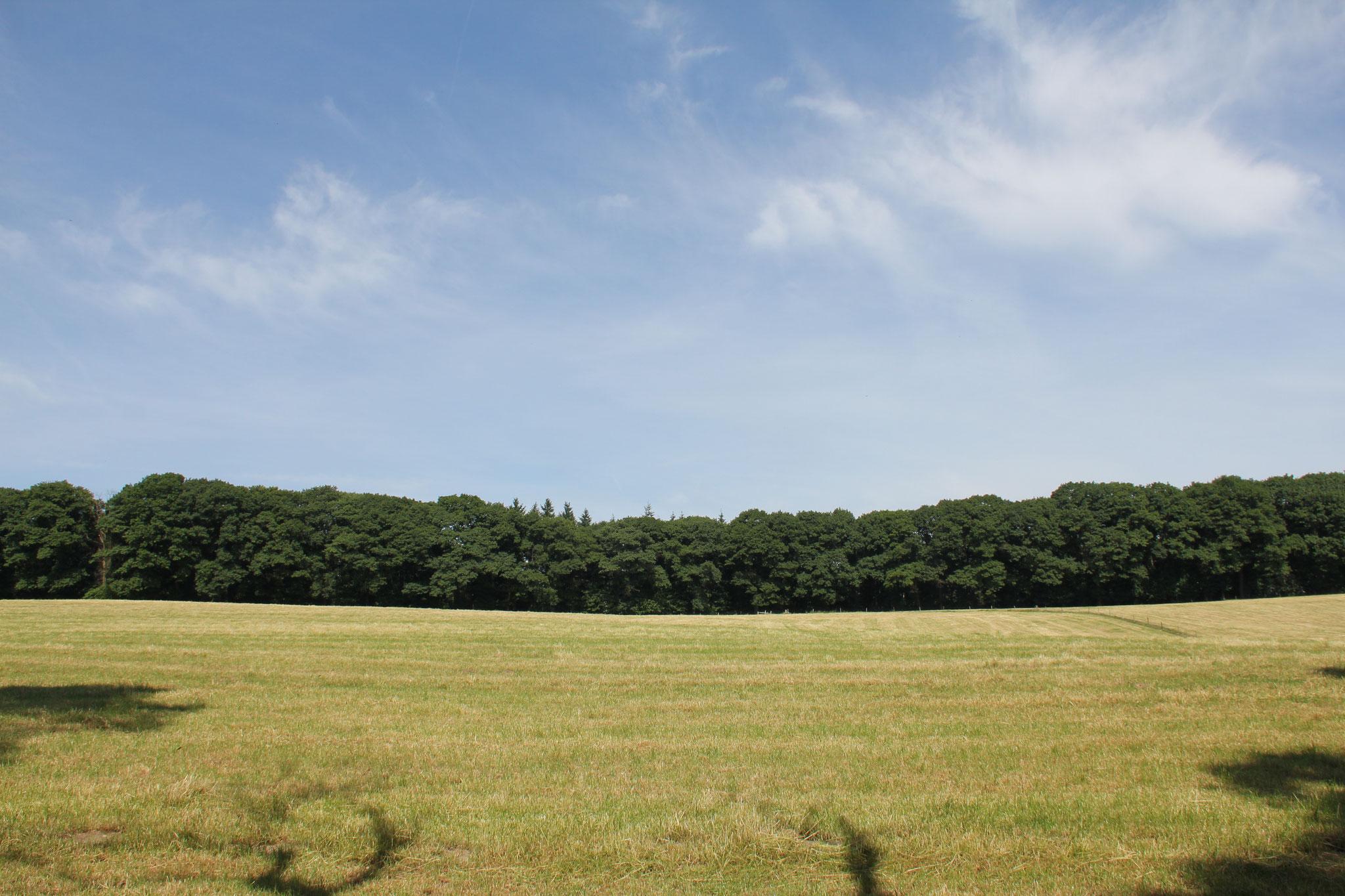 Zicht op de bosrand waarop het hoofdhuis was geprojecteerd, gezien vanuit het dal.