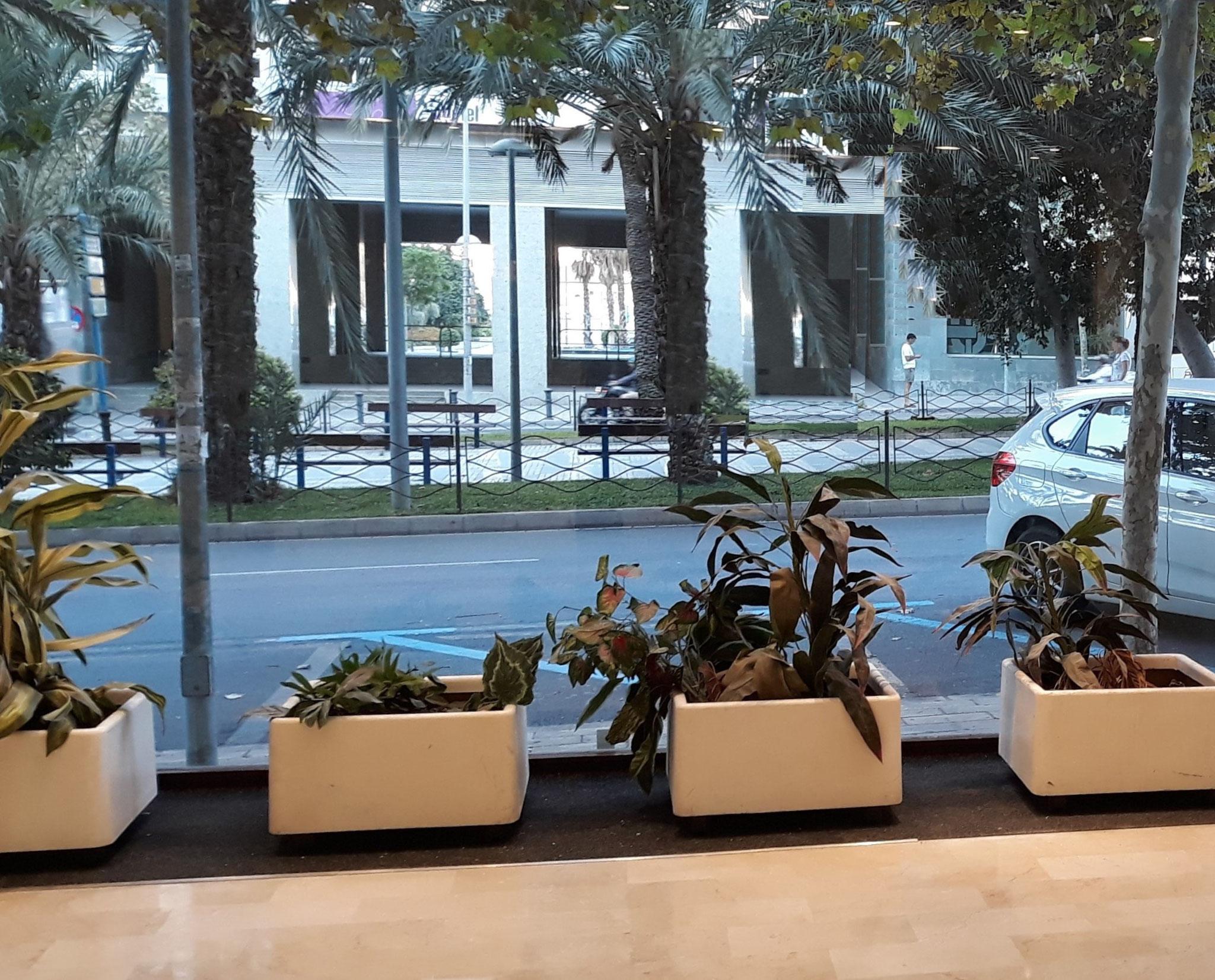 Busco Local en la mejor zona de negocios del centro de Alicante