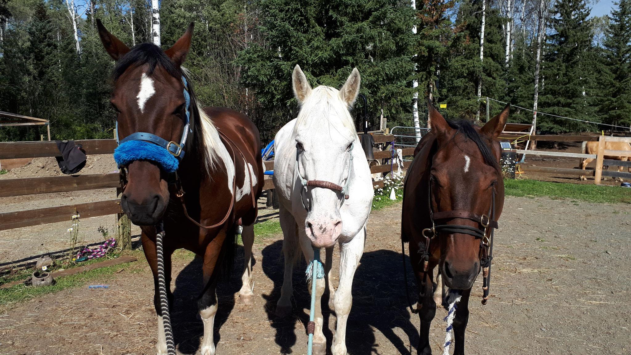 Apache, Geronimo, Tucker