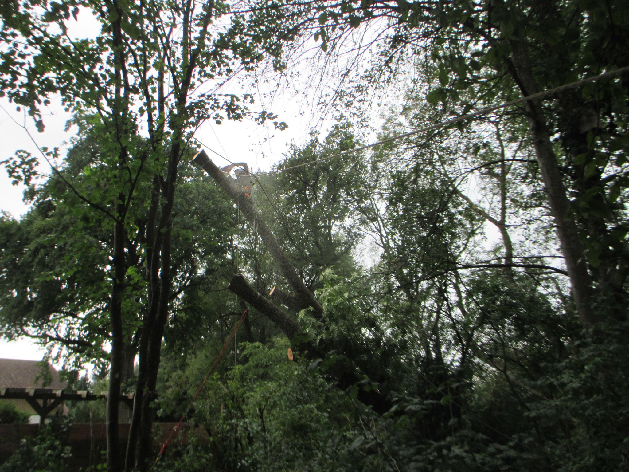 Baumfällung Windwurf Mühldorf am Inn