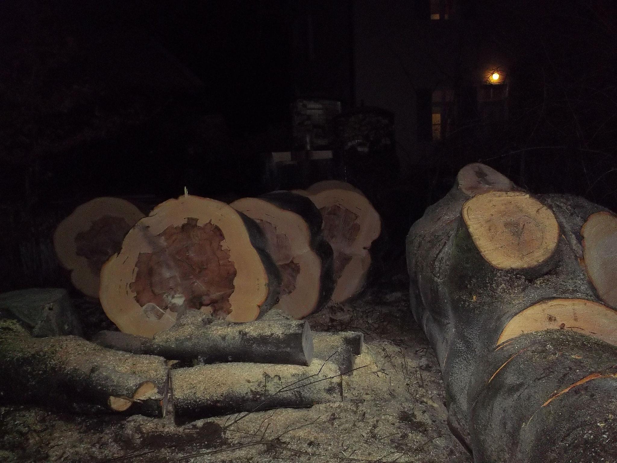 Baumfällung München - Wenn die Tage kürzer werden und die Arbeit fertig werden muß.