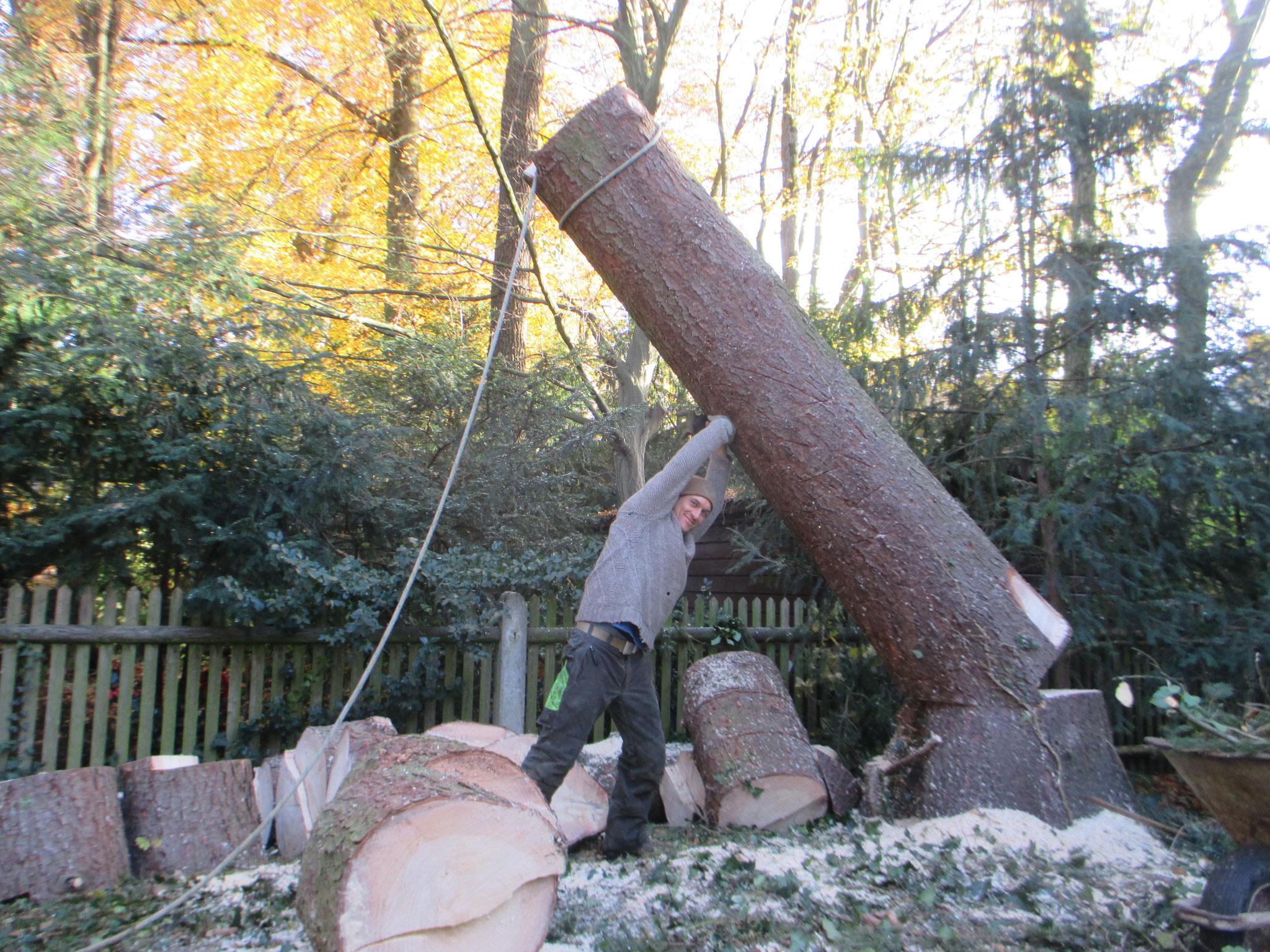 Baumsicherung München