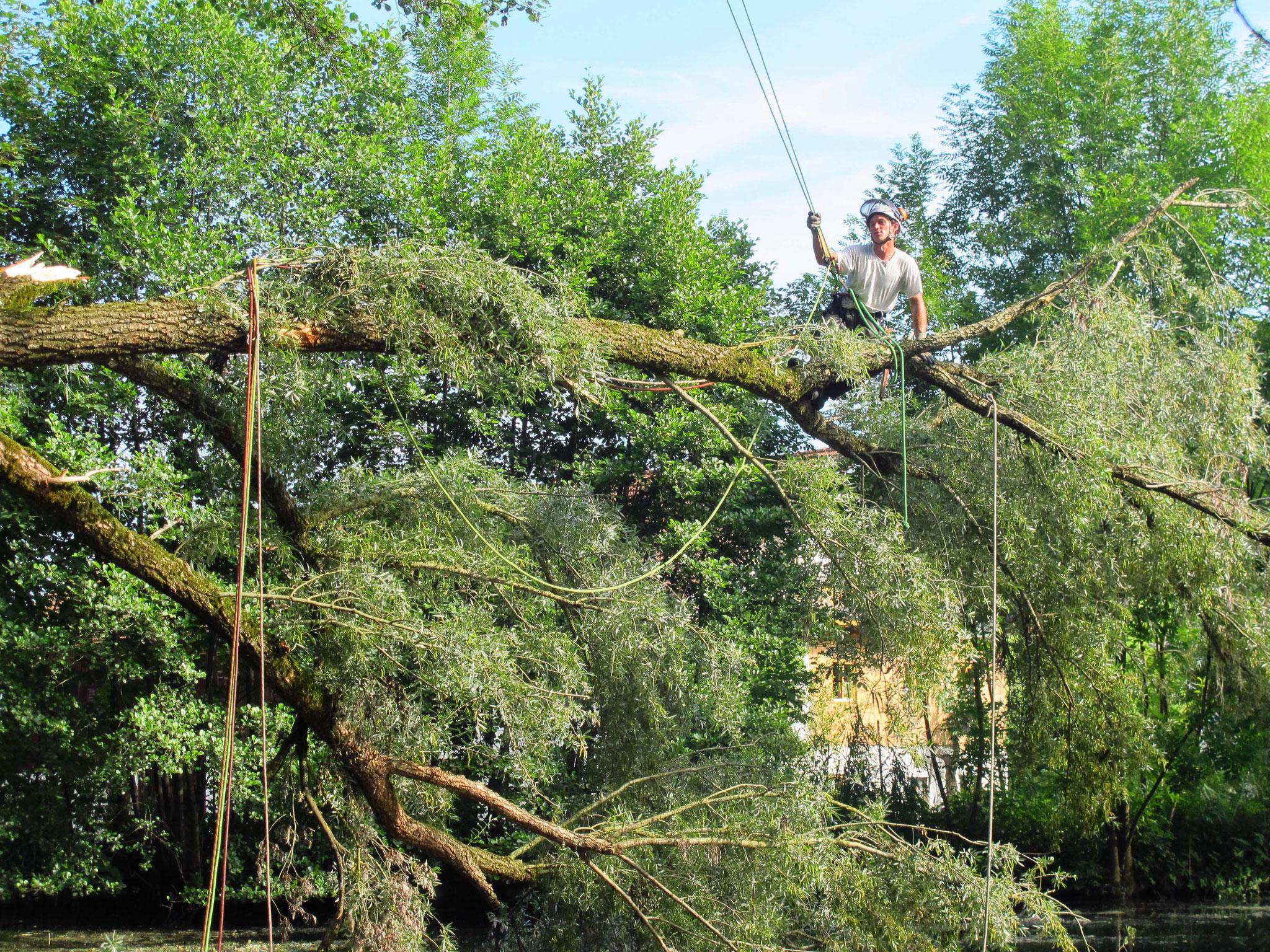Aufarbeitung Windwurf, Gemeinde Babensham