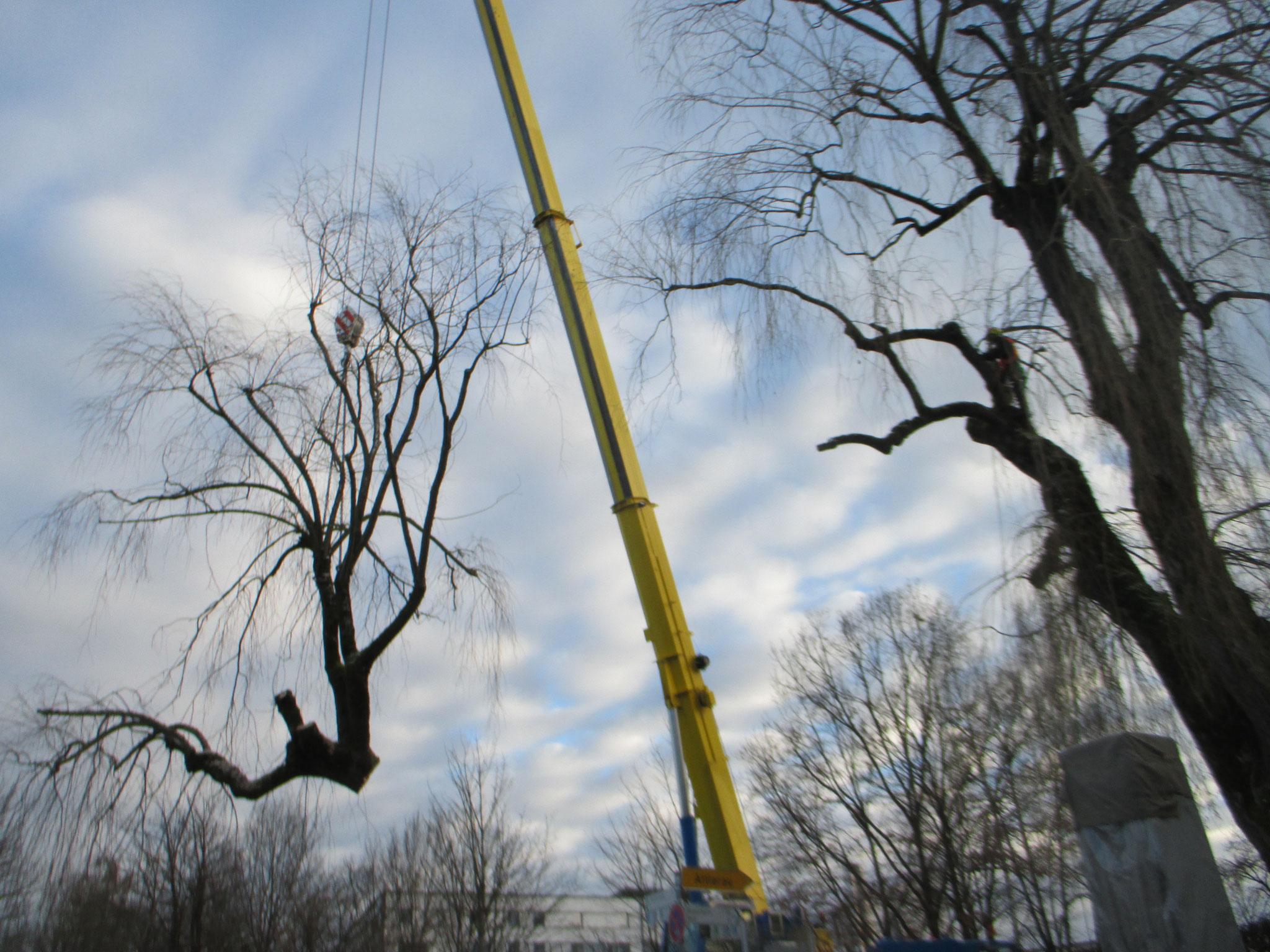 Baumfällung mit Kranunterstützung Wasserburg