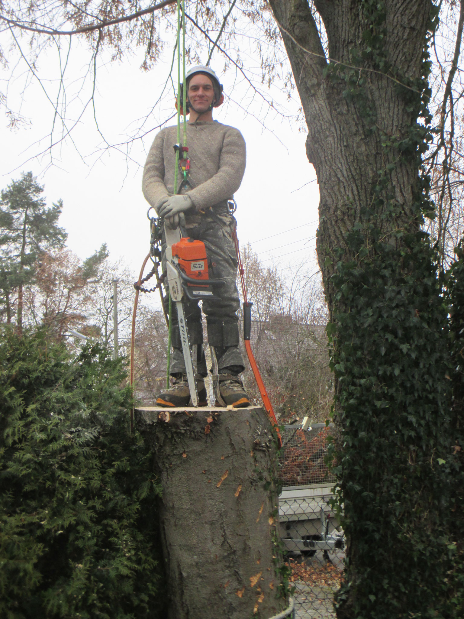 Baumfällung Gräfelfing