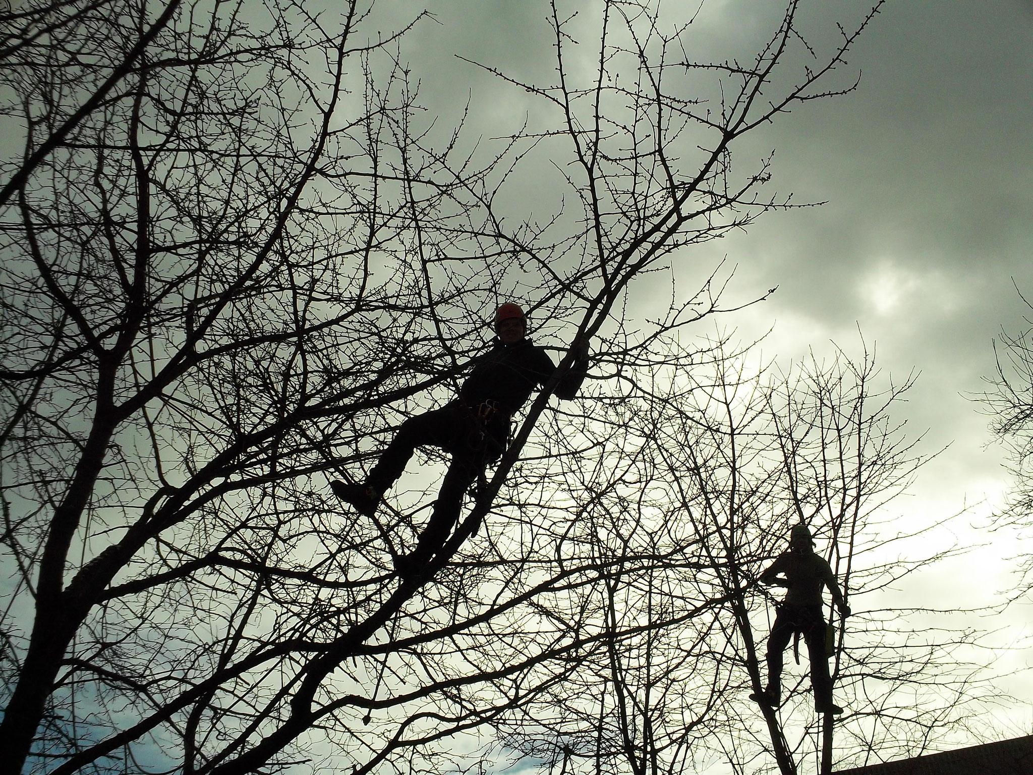 Baumpflege in Baldham
