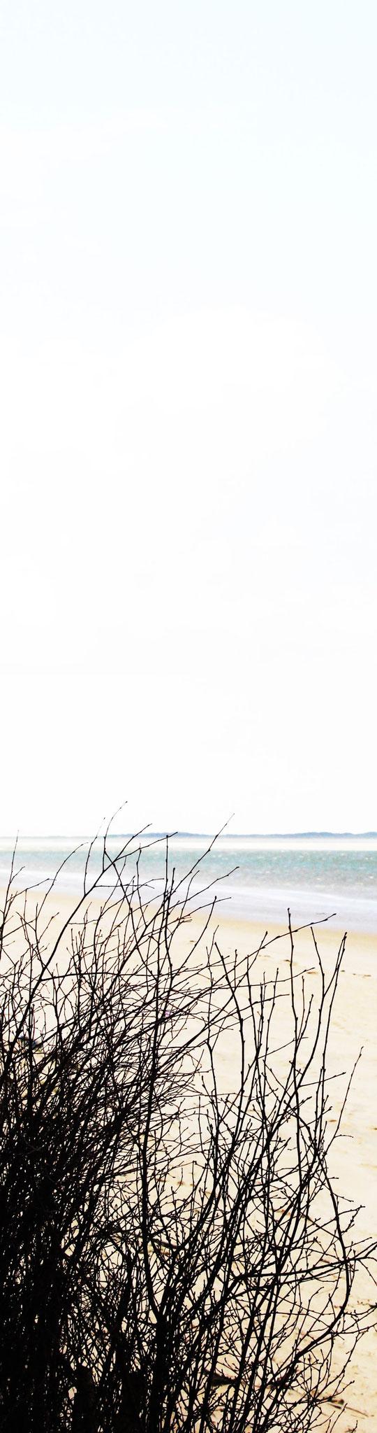 STRAND[büschel] Cape Cod