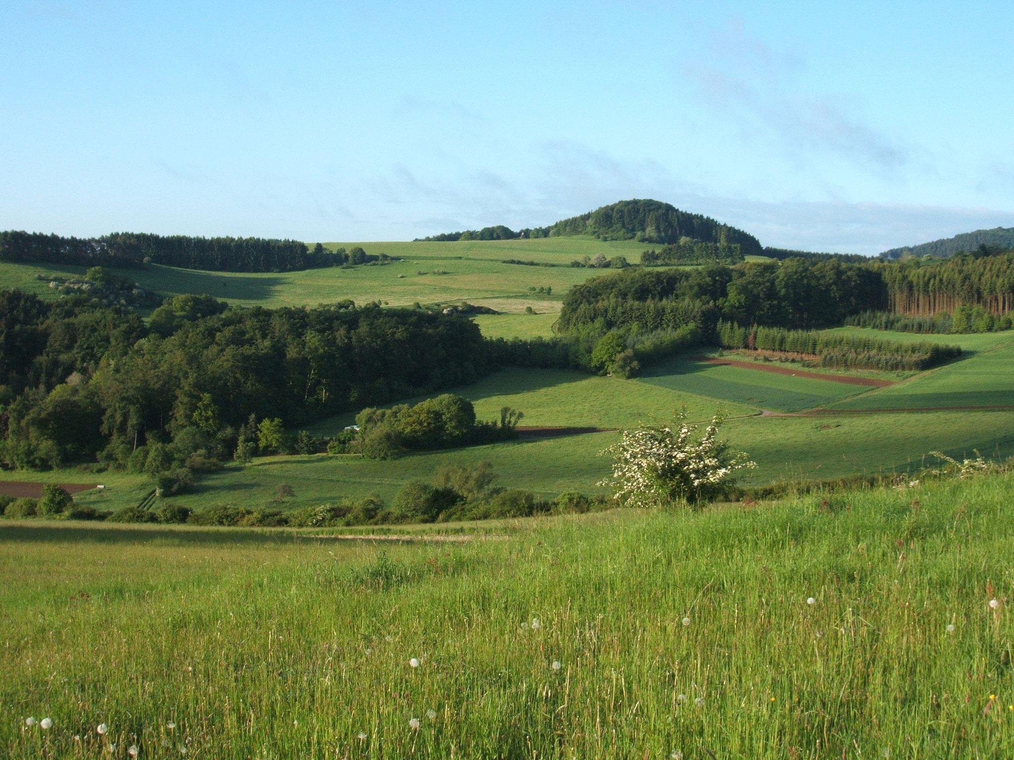 Hippersbachtal mit Vulkanberg Riemerich bei Daun-Neunkirchen
